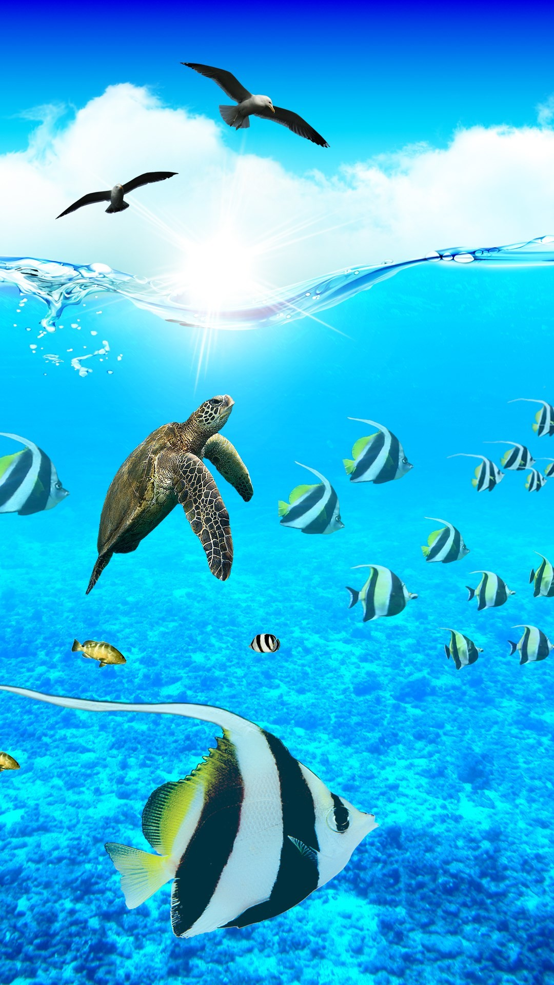 Res: 1080x1920, Underwater Wallpaper Gallery Beautiful Sea Animals Backgrounds. Wallpapers  Page 3 Premiumjoypl