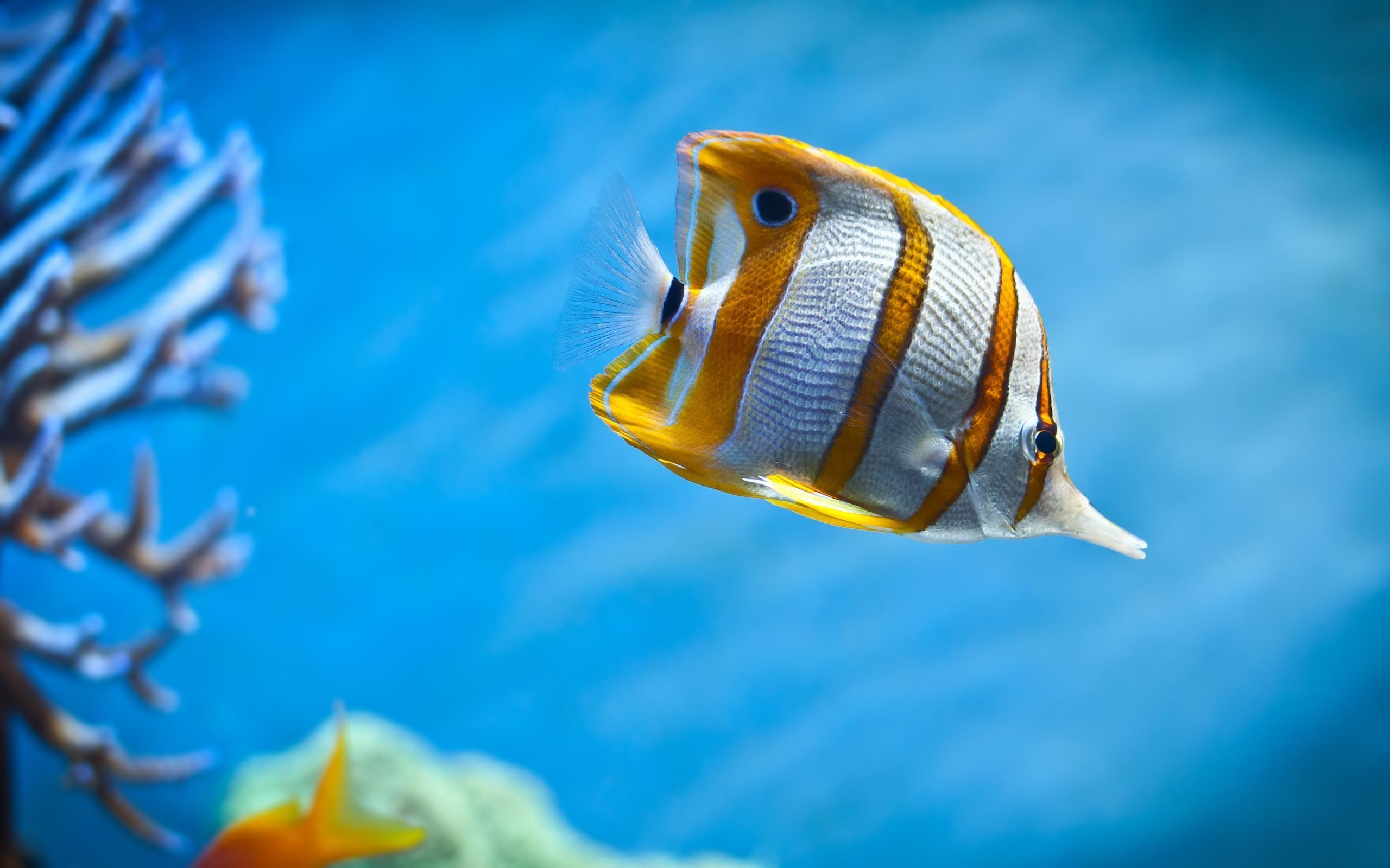 Res: 2560x1600, sea life fish under water ocean wallpapers hd