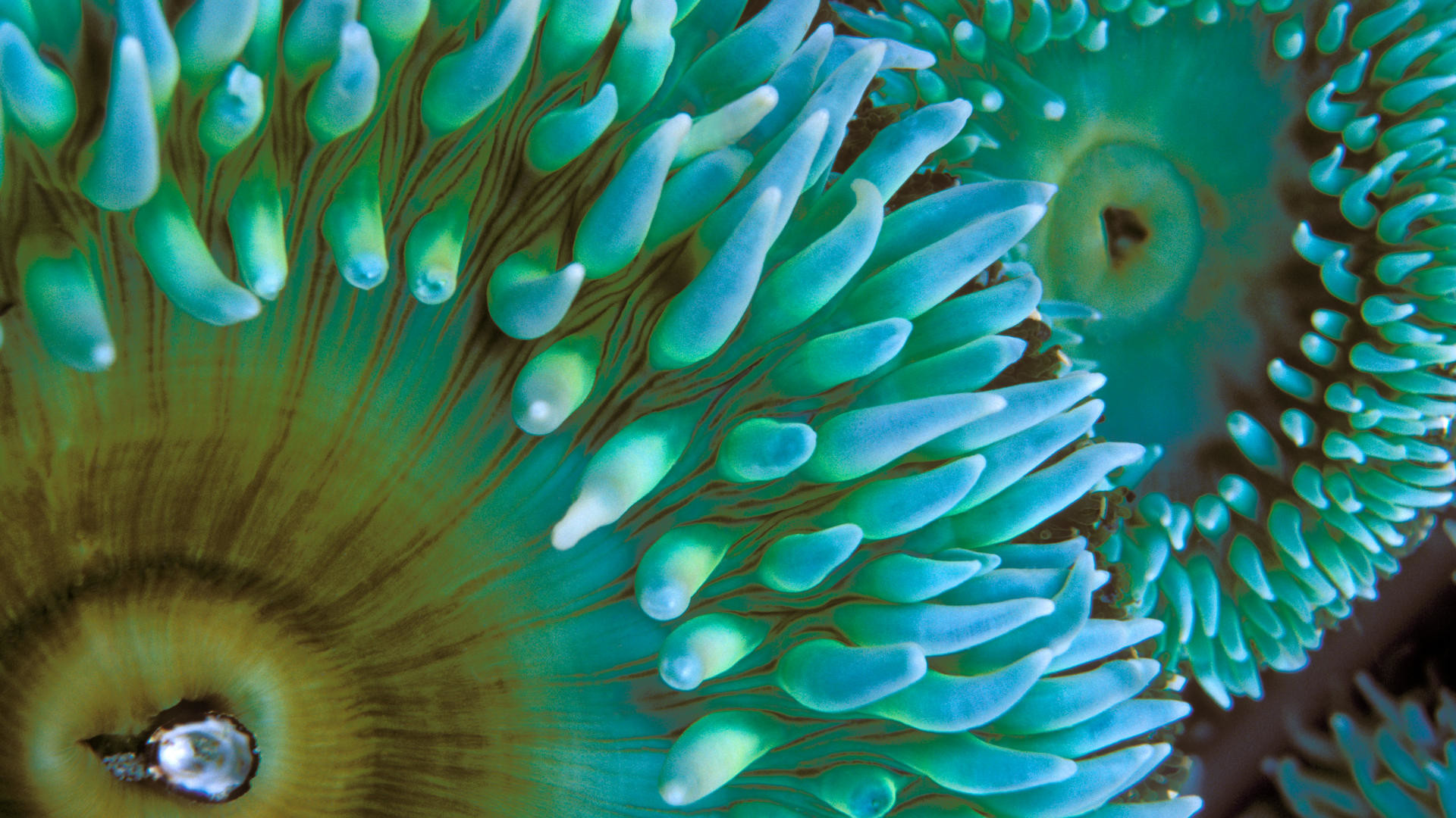 Res: 1920x1080, ... Wallpapers · Large Sea Life Computer Background Images, GsFDcY Graphics  ...