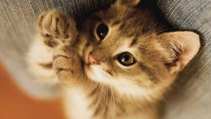 Baby Kitten wallpapers