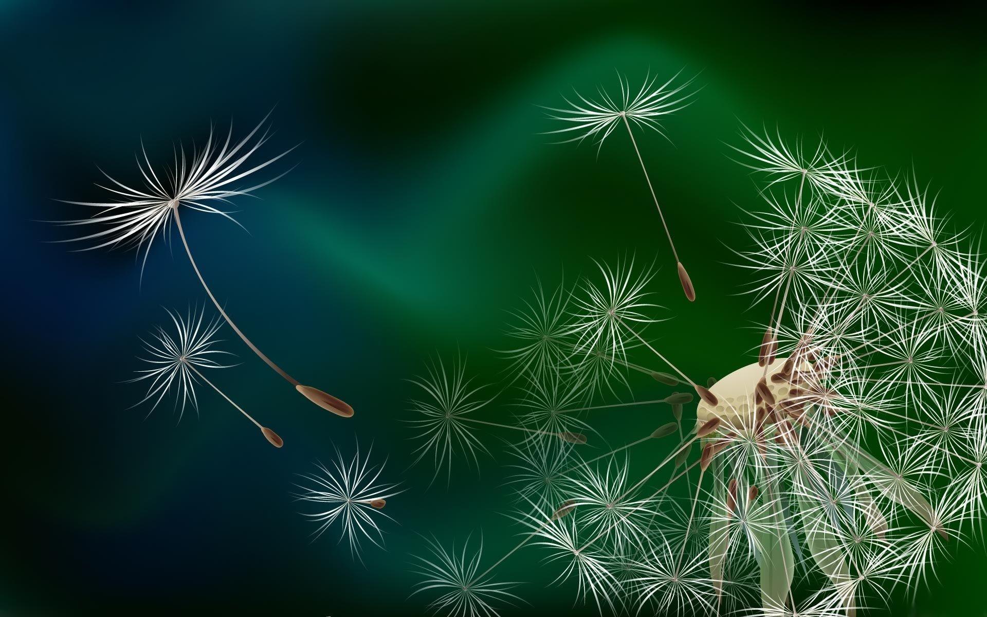 Res: 1920x1200, Computer Backgrounds Seeds Dandelion Wallpapers