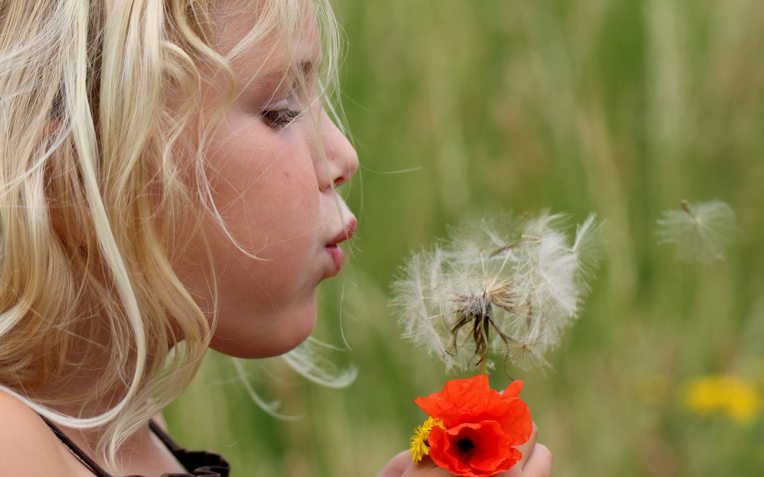 Res: 2560x1600, Girl blowing on a dandelion flower