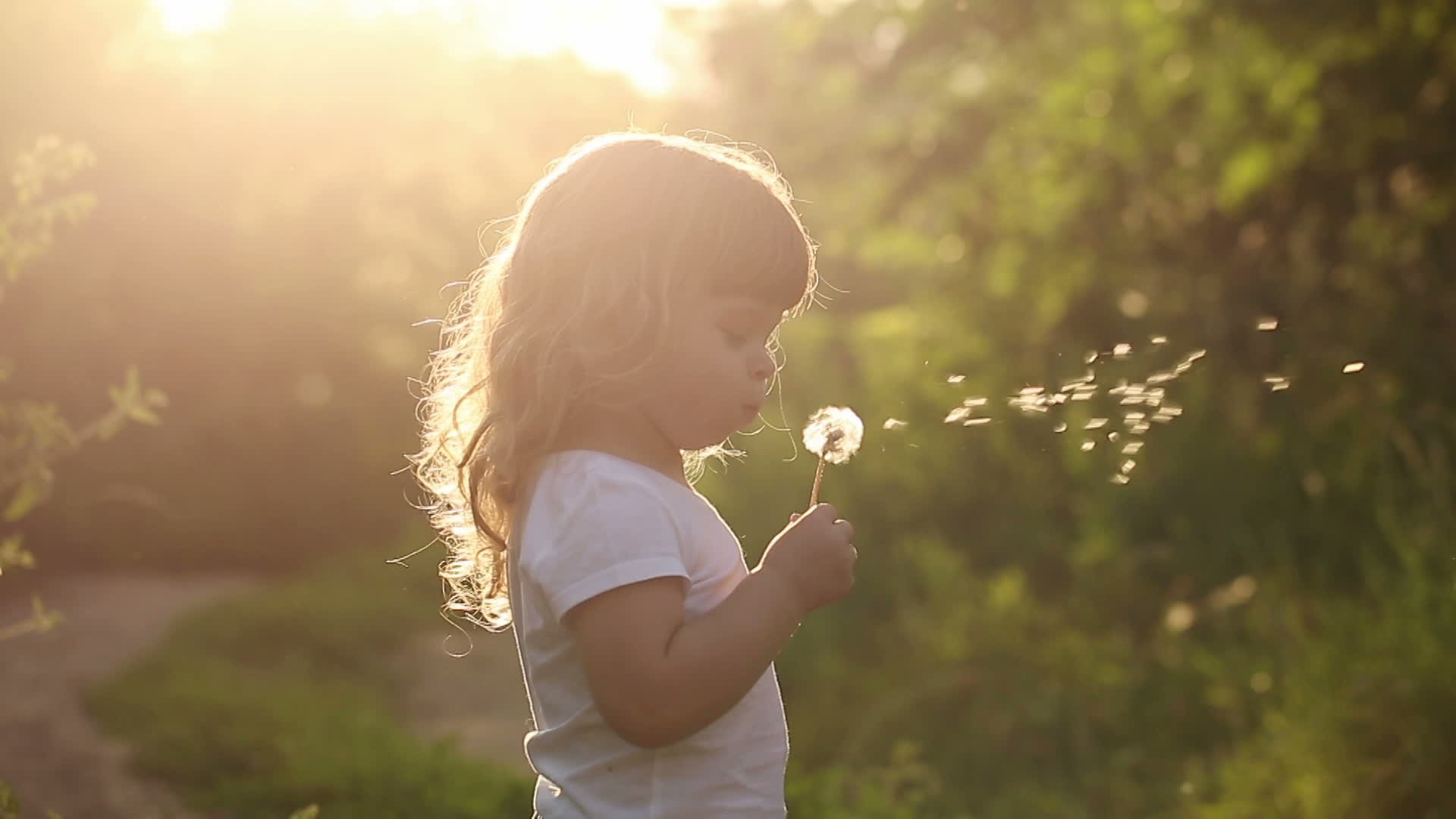 Res: 1920x1080, Cute little girl is blowing on dandelion
