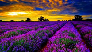 Provence wallpapers