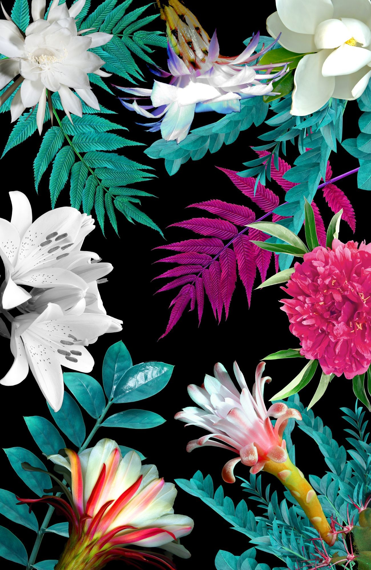 Res: 1300x2000, Exotic Flower Wallpapers - Wallpaper Cave
