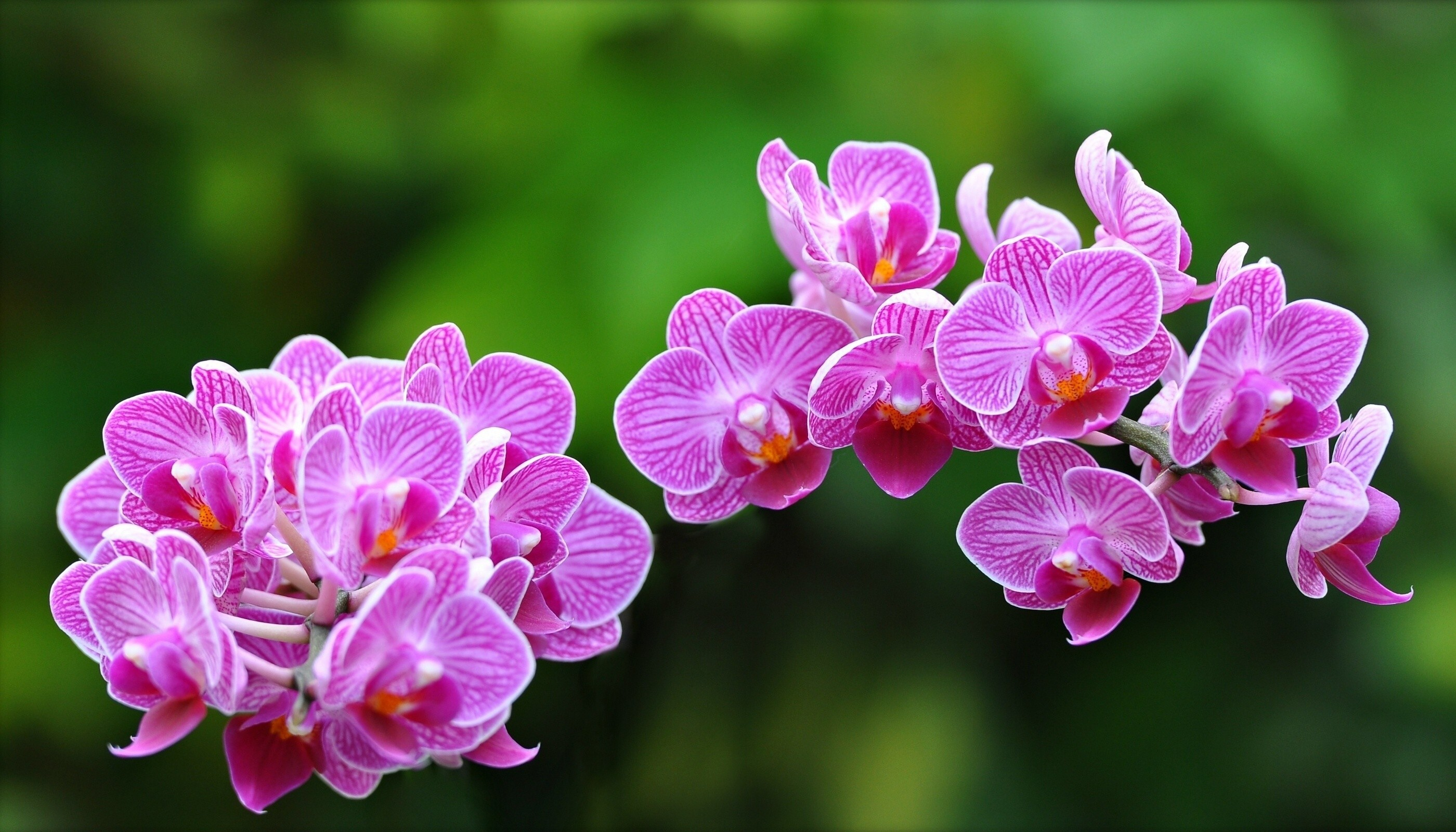 Res: 2800x1600, Res: 1932x1566, Exotic Flowers Wallpapers Wallpaper
