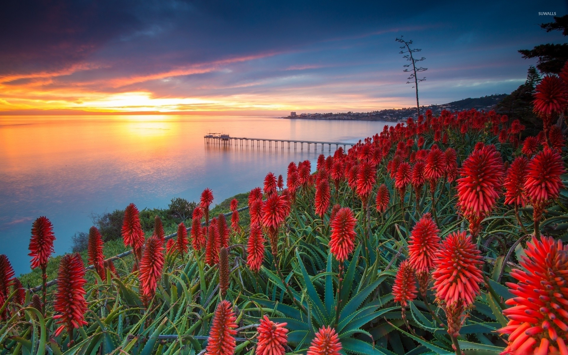 Res: 1920x1200,  Sunset over exotic flowers wallpaper · Download · 1920x1080 ...