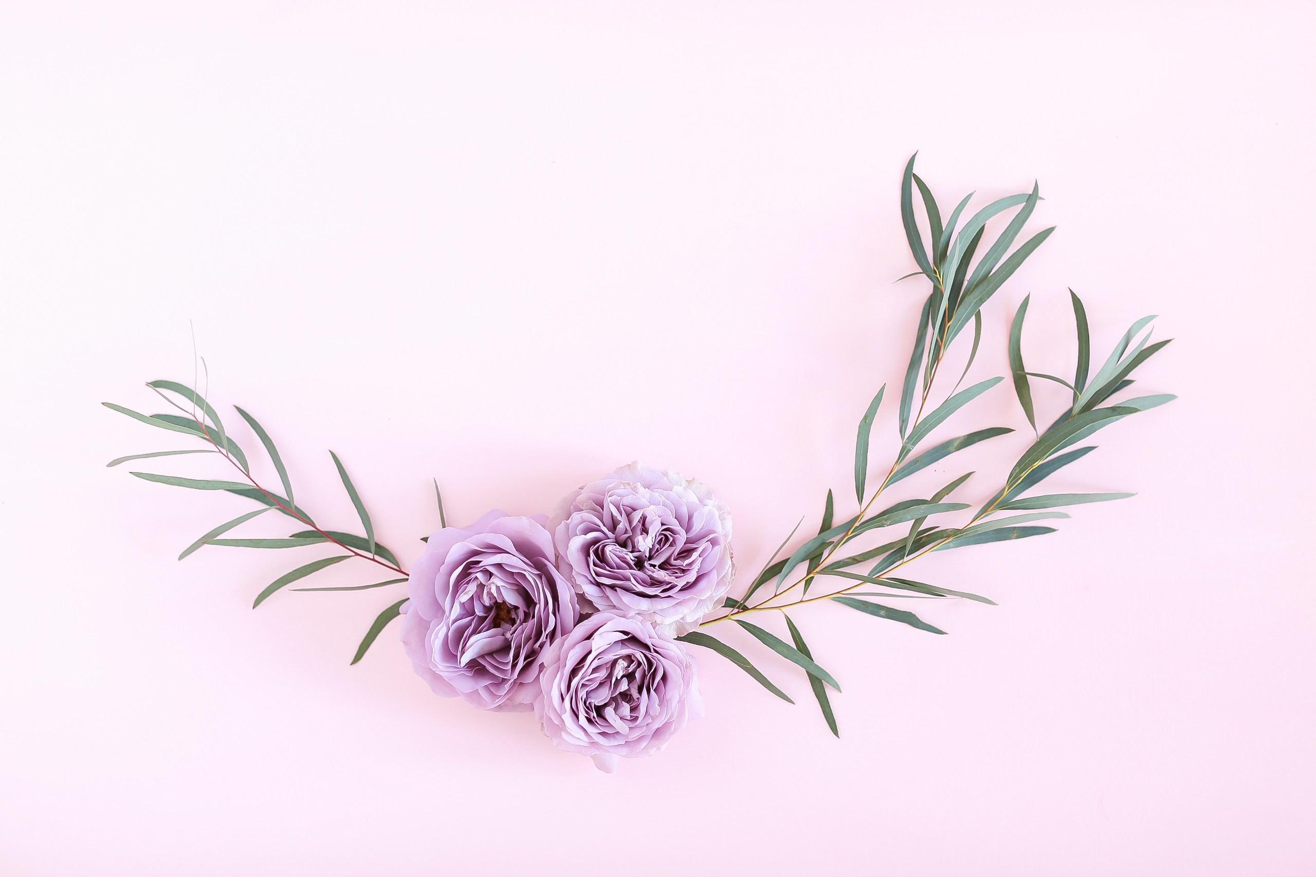 Res: 2560x1707, Digital Blooms June 2018 | Free Pantone Inspired Desktop Wallpapers for  Spring and Summer | Free