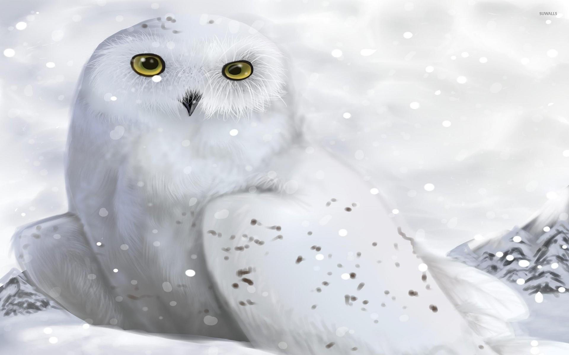 Res: 1920x1200, White owl wallpaper