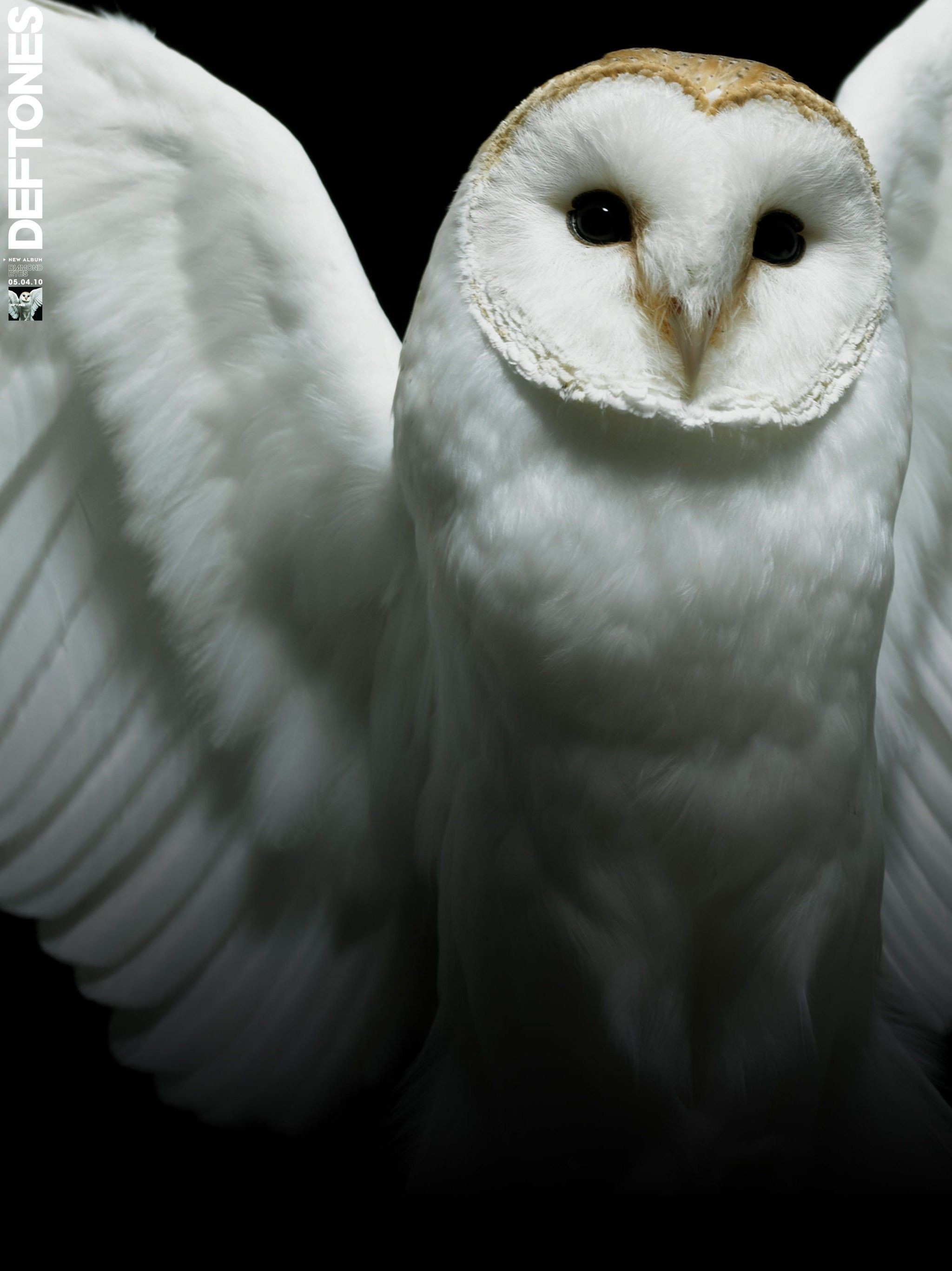 Res: 2048x2734, White Owl Wallpapers Group (70+)