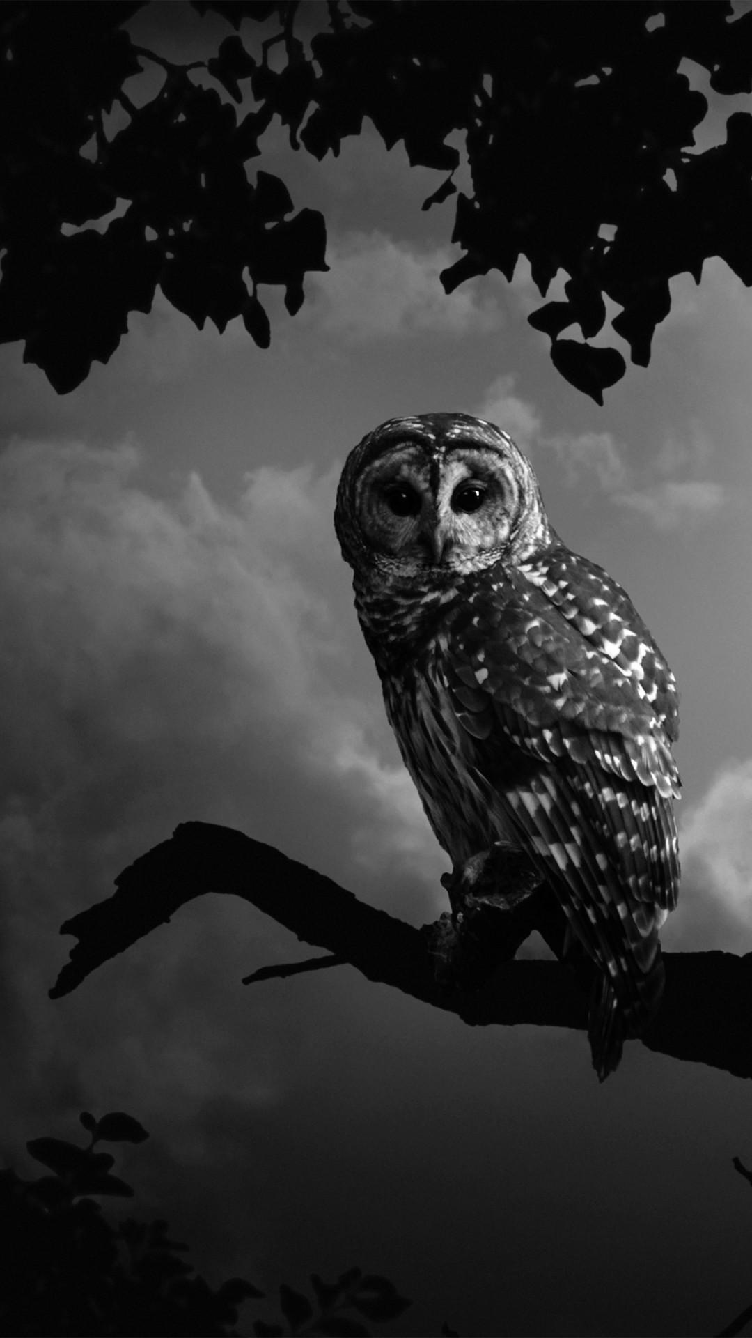 Res: 1080x1920, white owl wallpaper