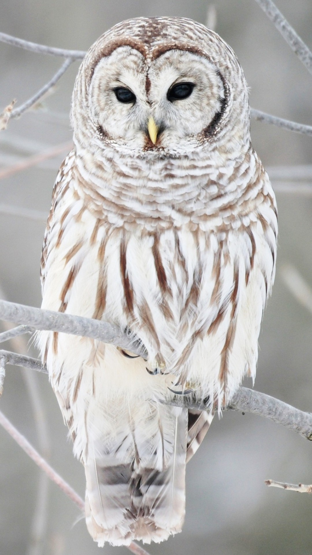 Res: 1080x1920, White Cute Owl Wallpaper for Android.