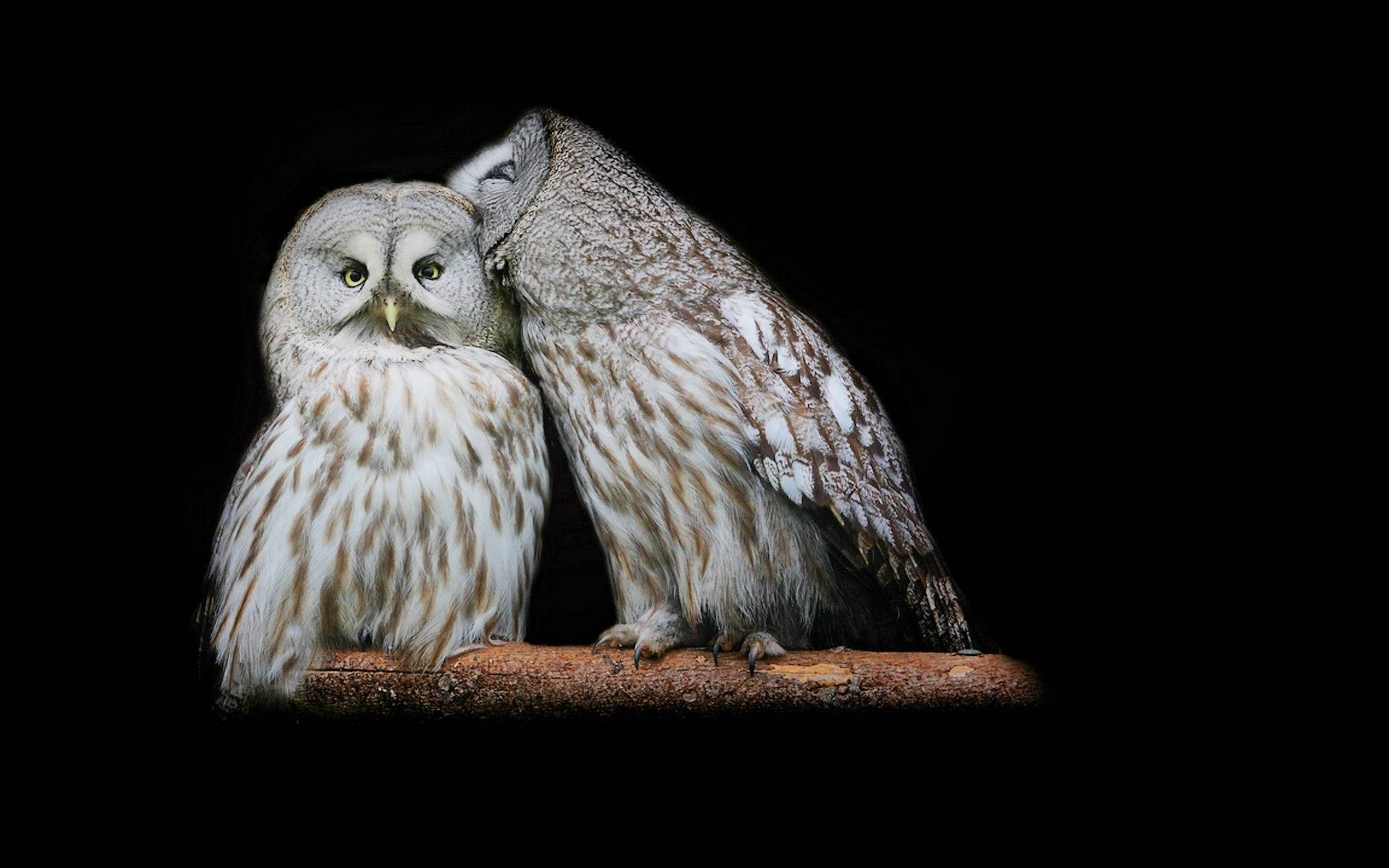 Res: 1920x1200, #40477, High Resolution Wallpapers white owl wallpaper