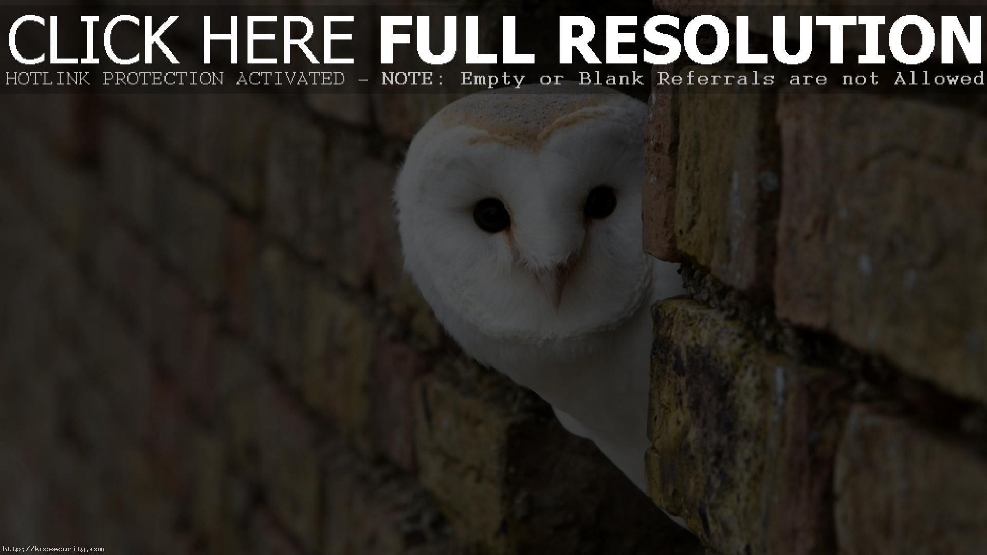 Res: 1920x1080, White Owl 30389