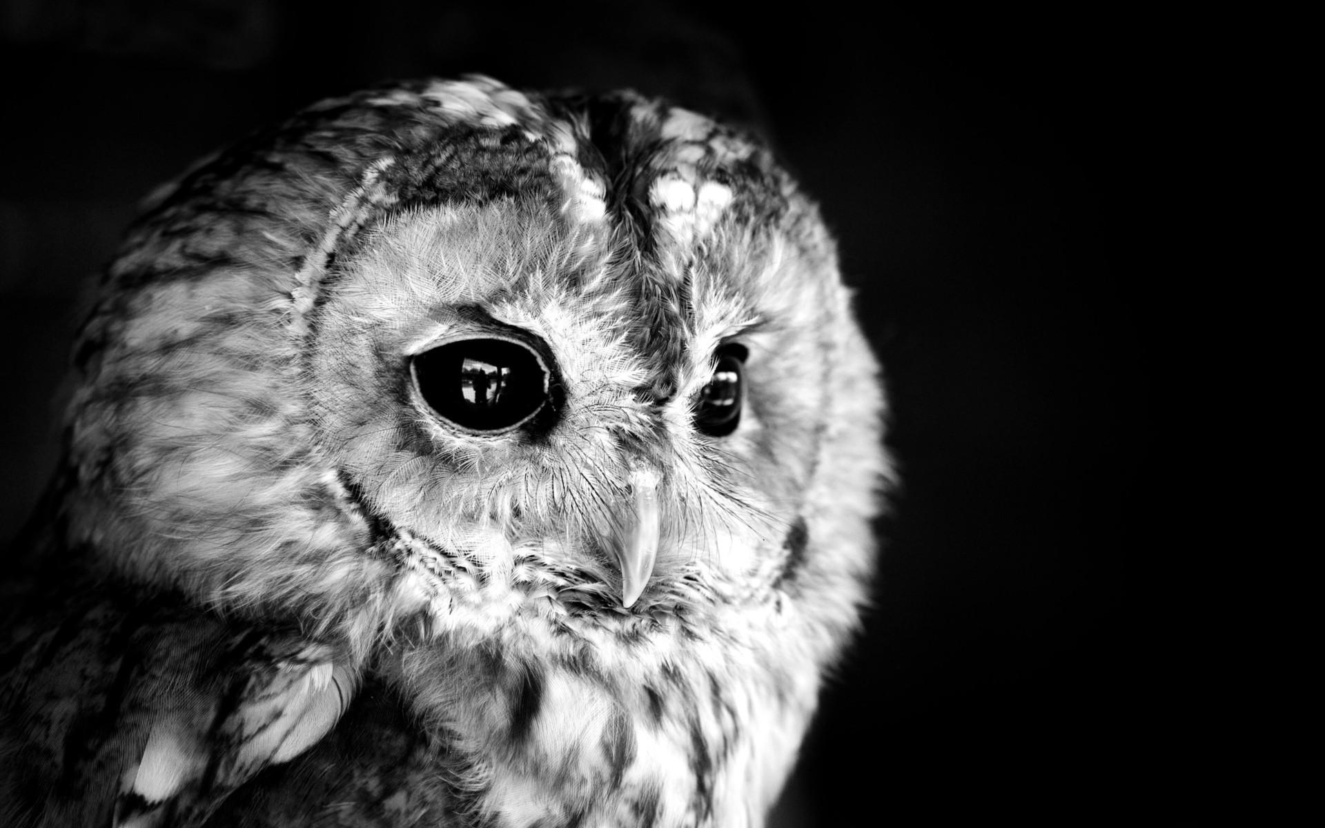 Res: 1920x1200, Black owl photo white monochrome face eyes feathers wallpaper |  |  55074 | WallpaperUP