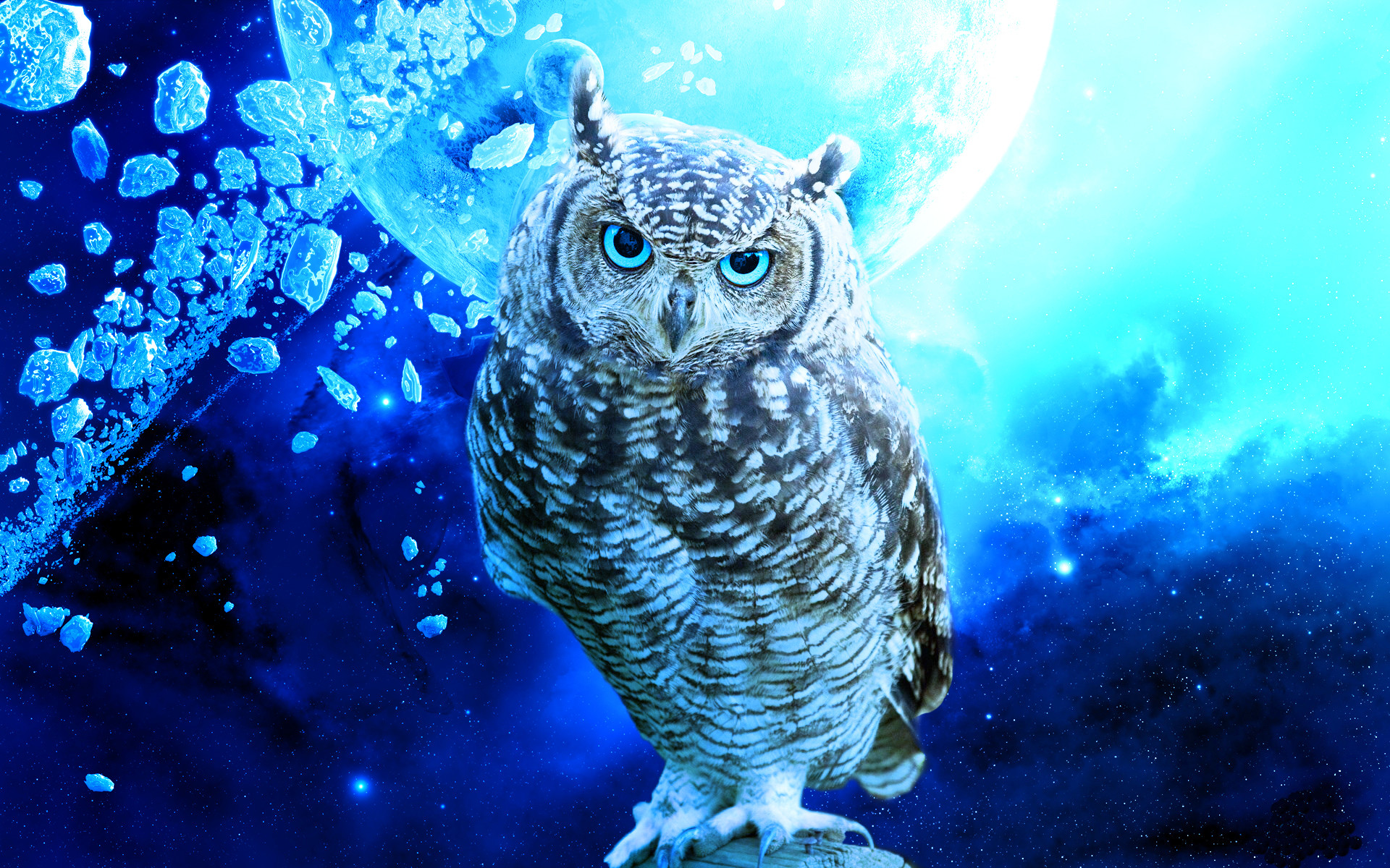 Res: 1920x1200, Fantasy Owl Wallpapers