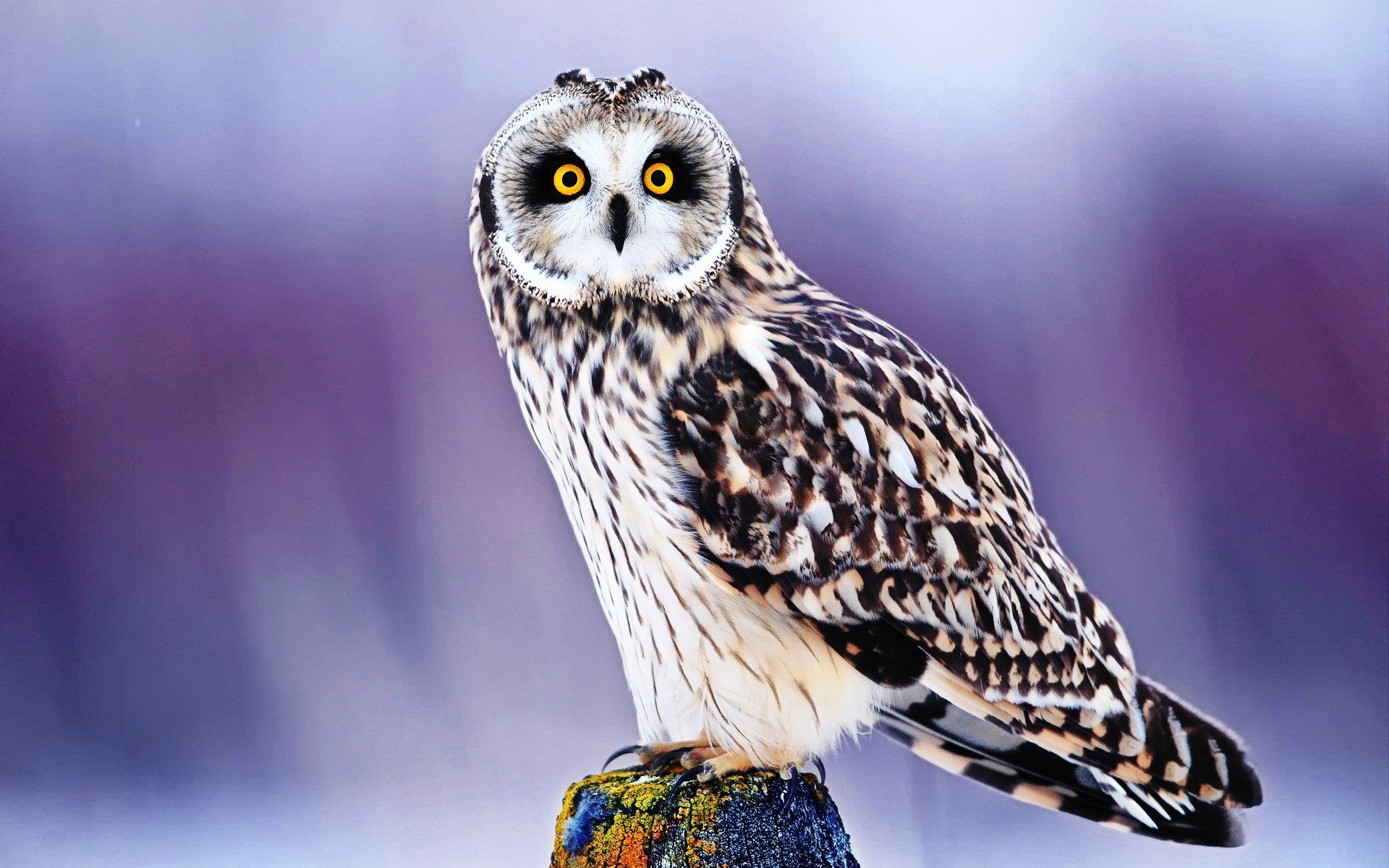 Res: 1920x1200, 1920x1080 Owl HD Wallpapers Earth Blog 1024×576 White Owl Wallpapers (42  Wallpapers) |