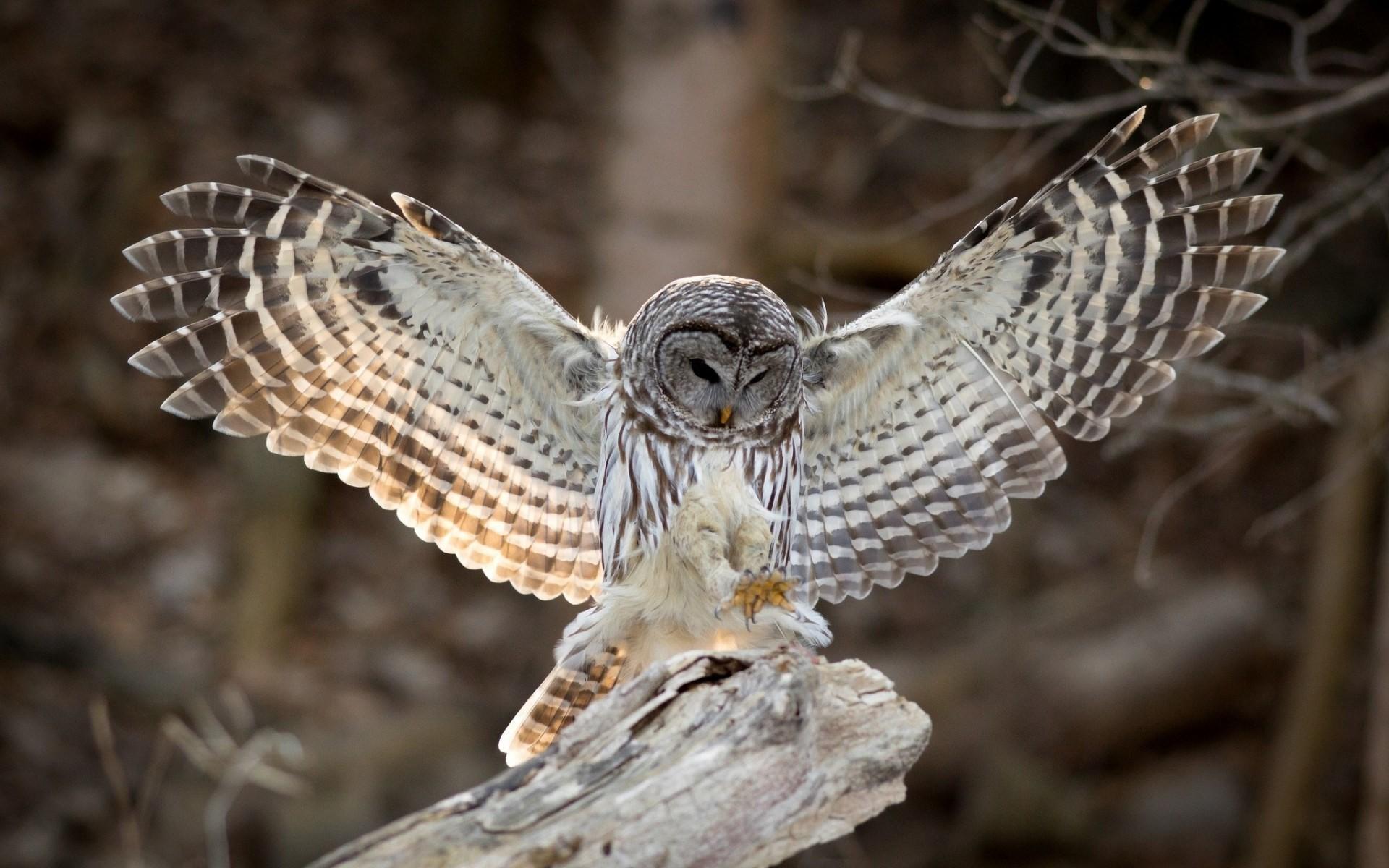Res: 1920x1200, Owl wings