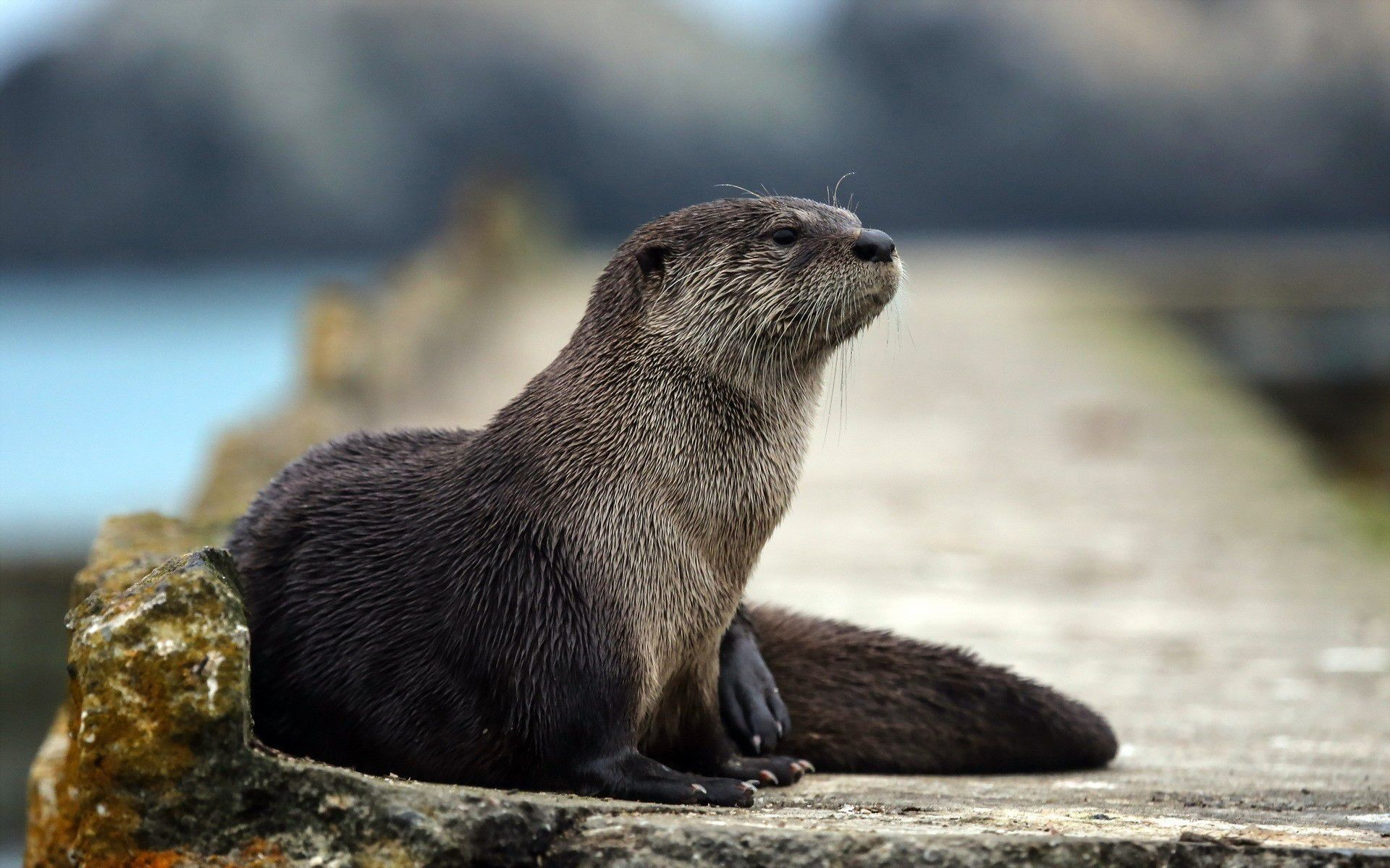 Res: 1920x1200, Cute Otter Wallpapers Wallpaper Cave