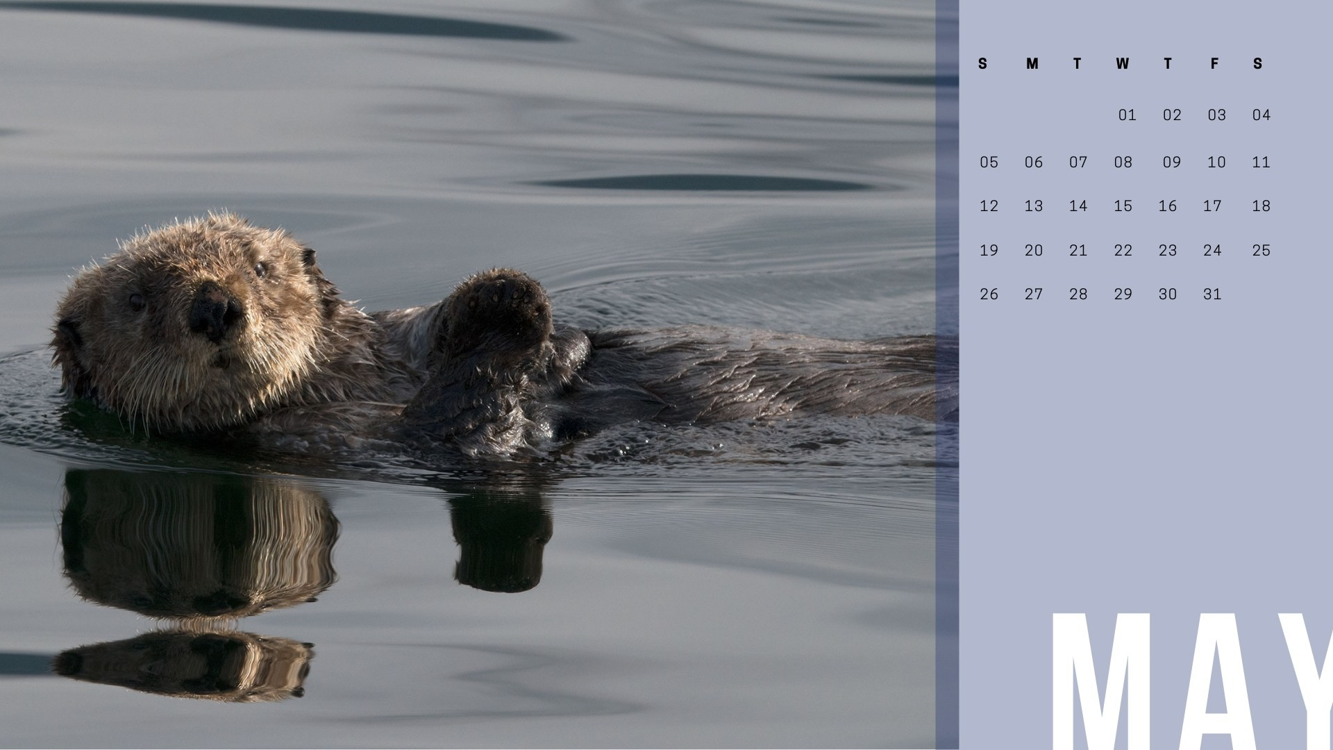 Res: 1920x1080, Sea otter near Sitka, Alaska. You may think he's a cute furry little thing,  but the males are the size of a Labrador retriever and can weigh 50 to 100  ...