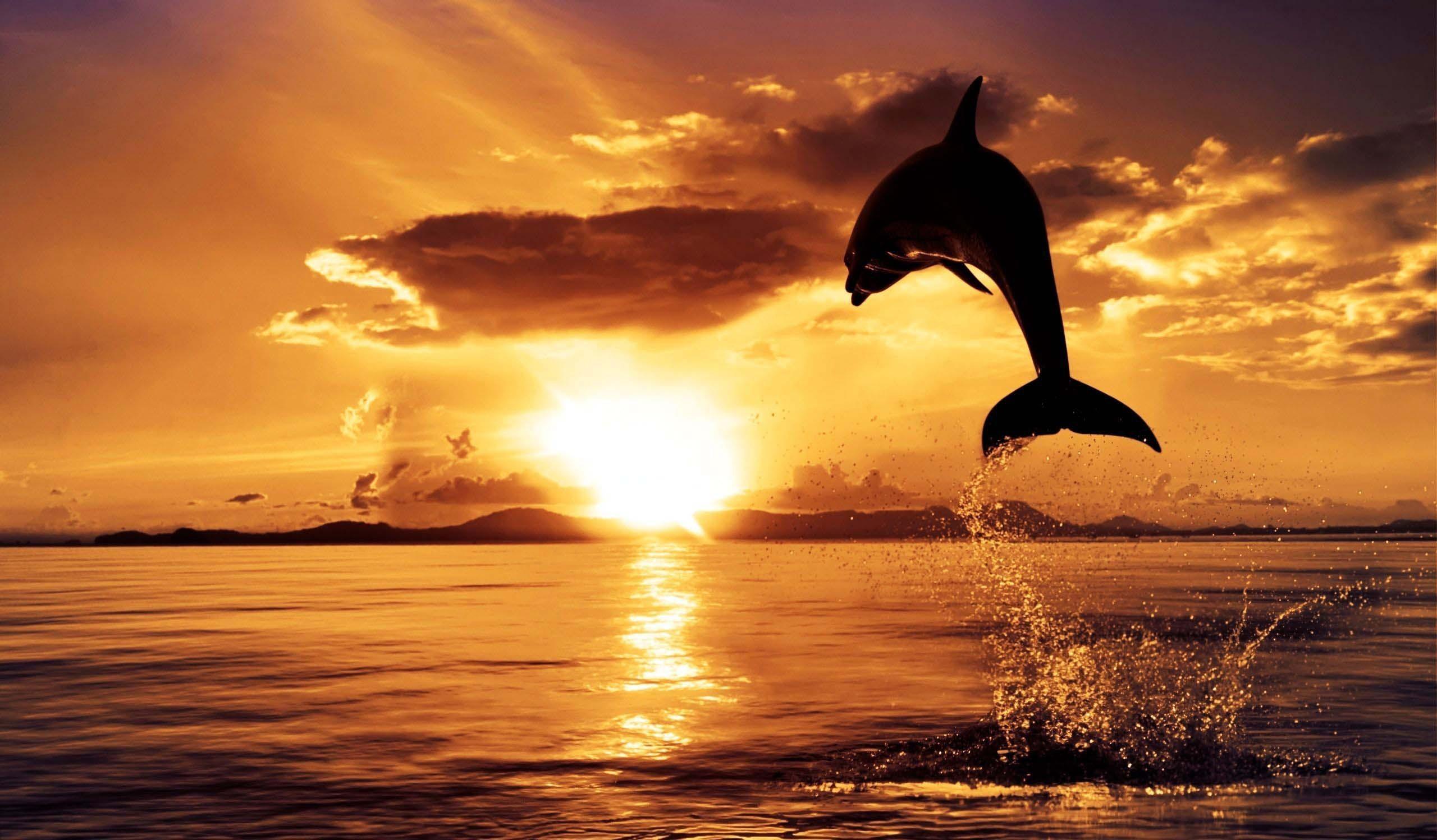 Res: 2560x1498, Ocean Sunset Wallpaper