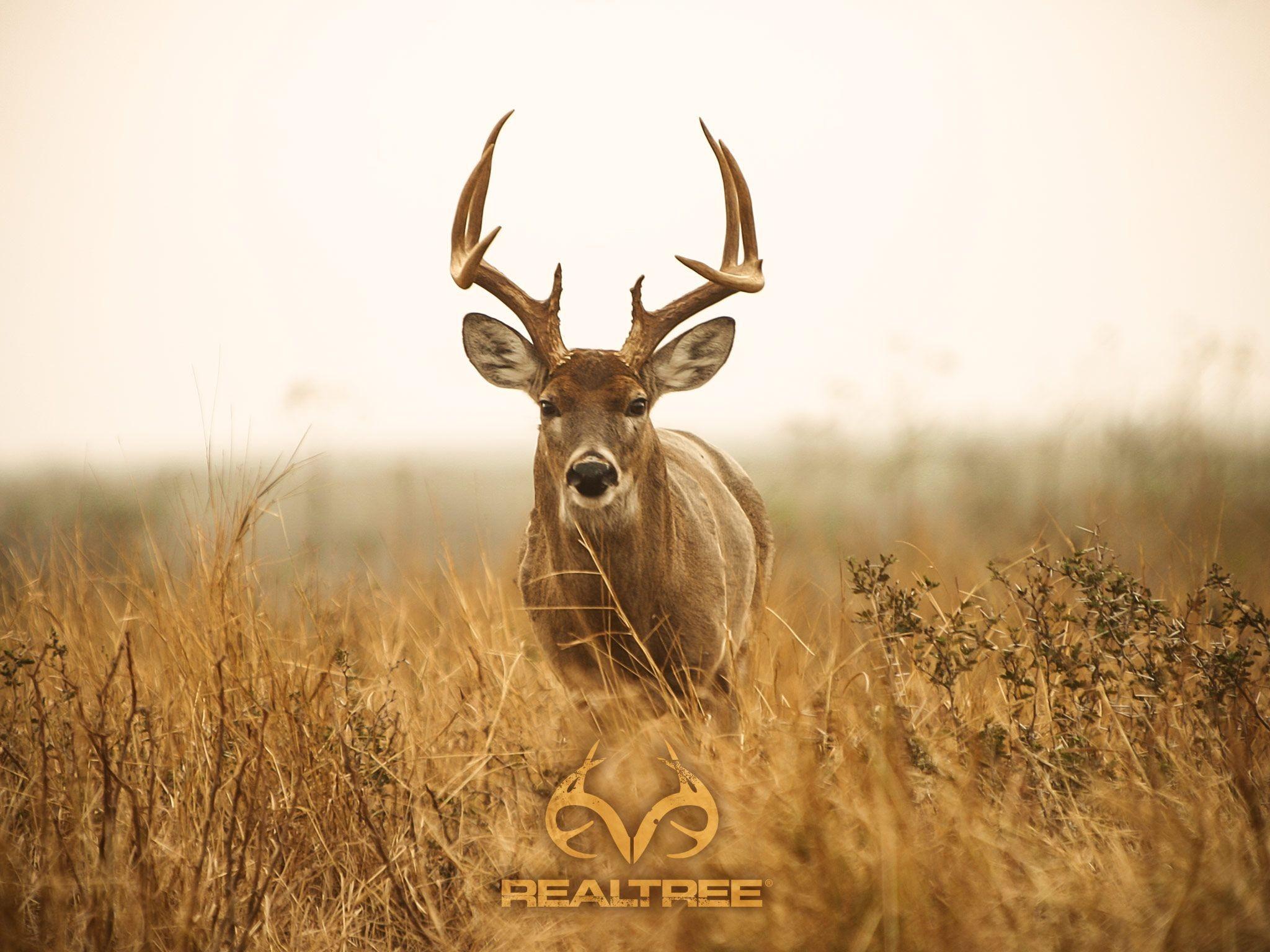 Res: 2048x1536,  Deer Hunting Desktop. | Decor | Deer wallpaper, Deer, Hunting