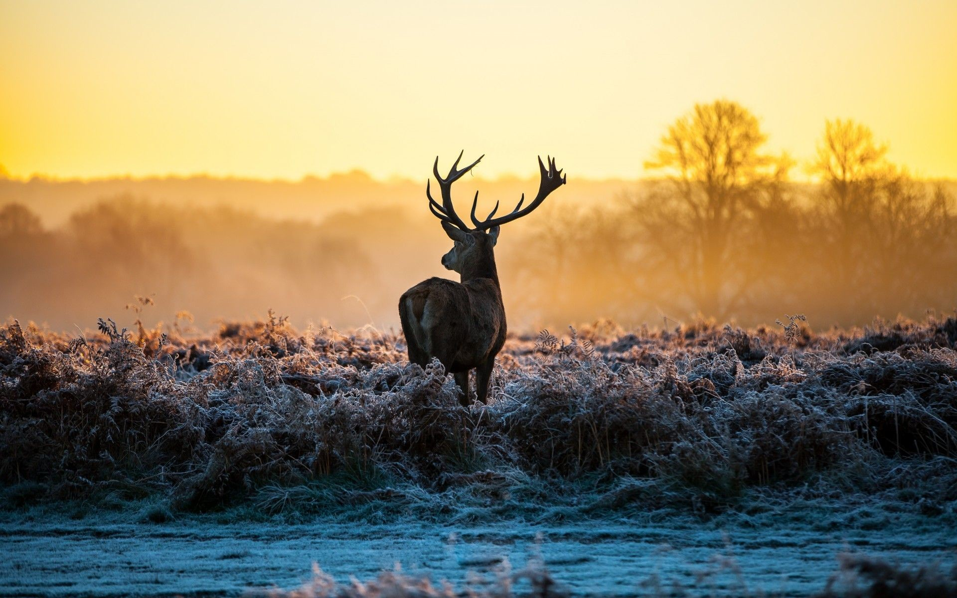 Res: 1920x1200, Fall Nature Pictures With Deer Hd Pictures 4 HD Wallpapers