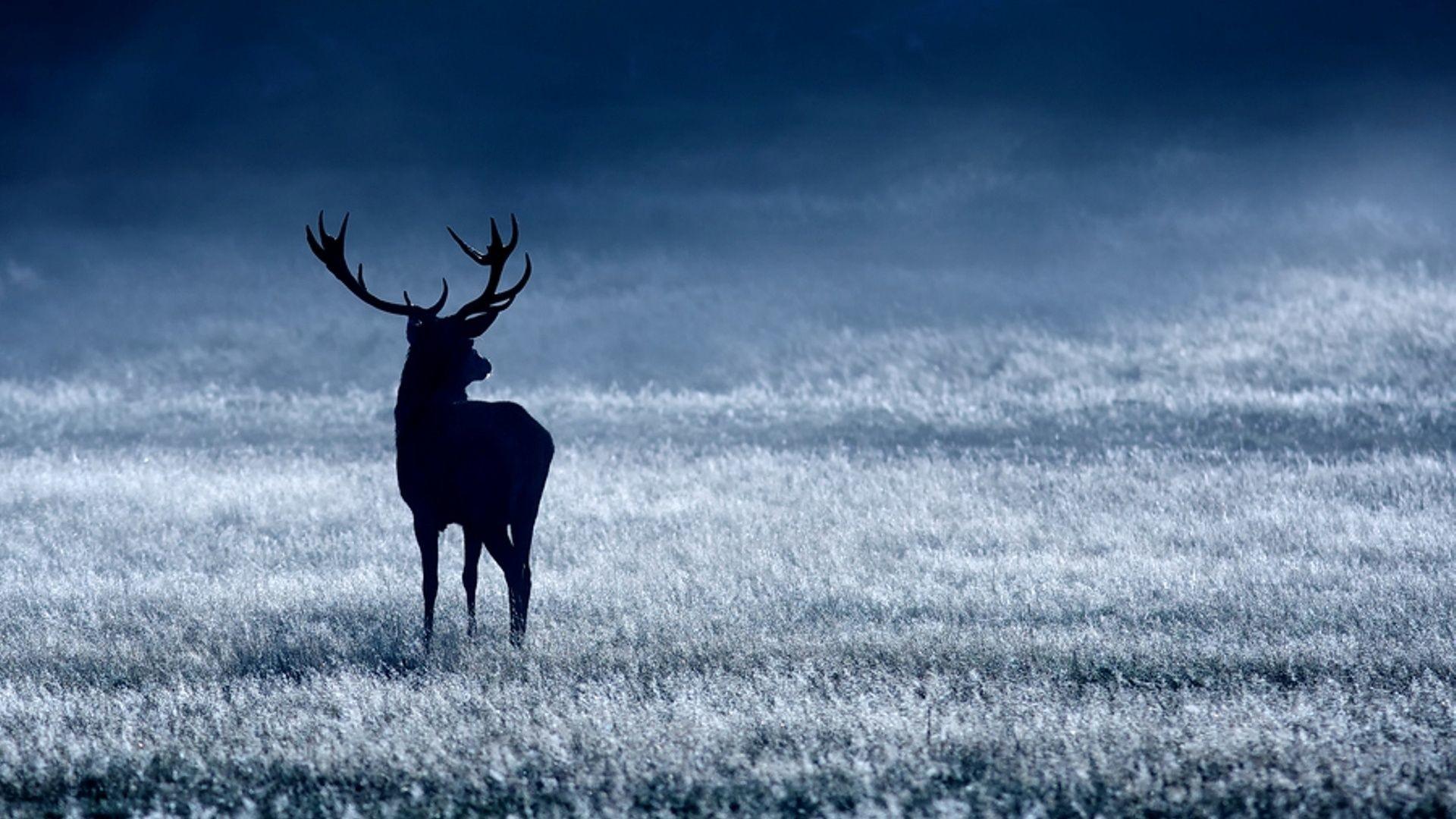 """Res: 1920x1080,  Deer Desktop Wallpaper 16668  px ~ HDWallSource.com""""> ·  Download · 1920x1200 Amazing Two Deer Antlers Wallpaper ..."""