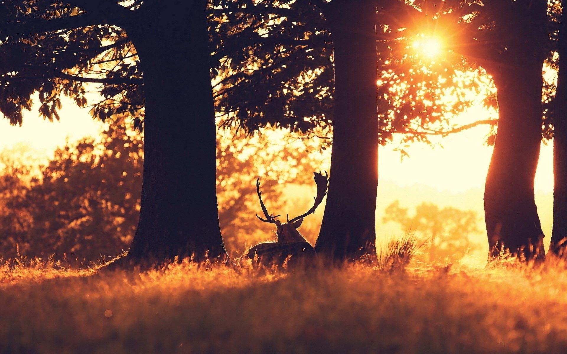 Res: 1920x1200, Deer Wallpaper 16670
