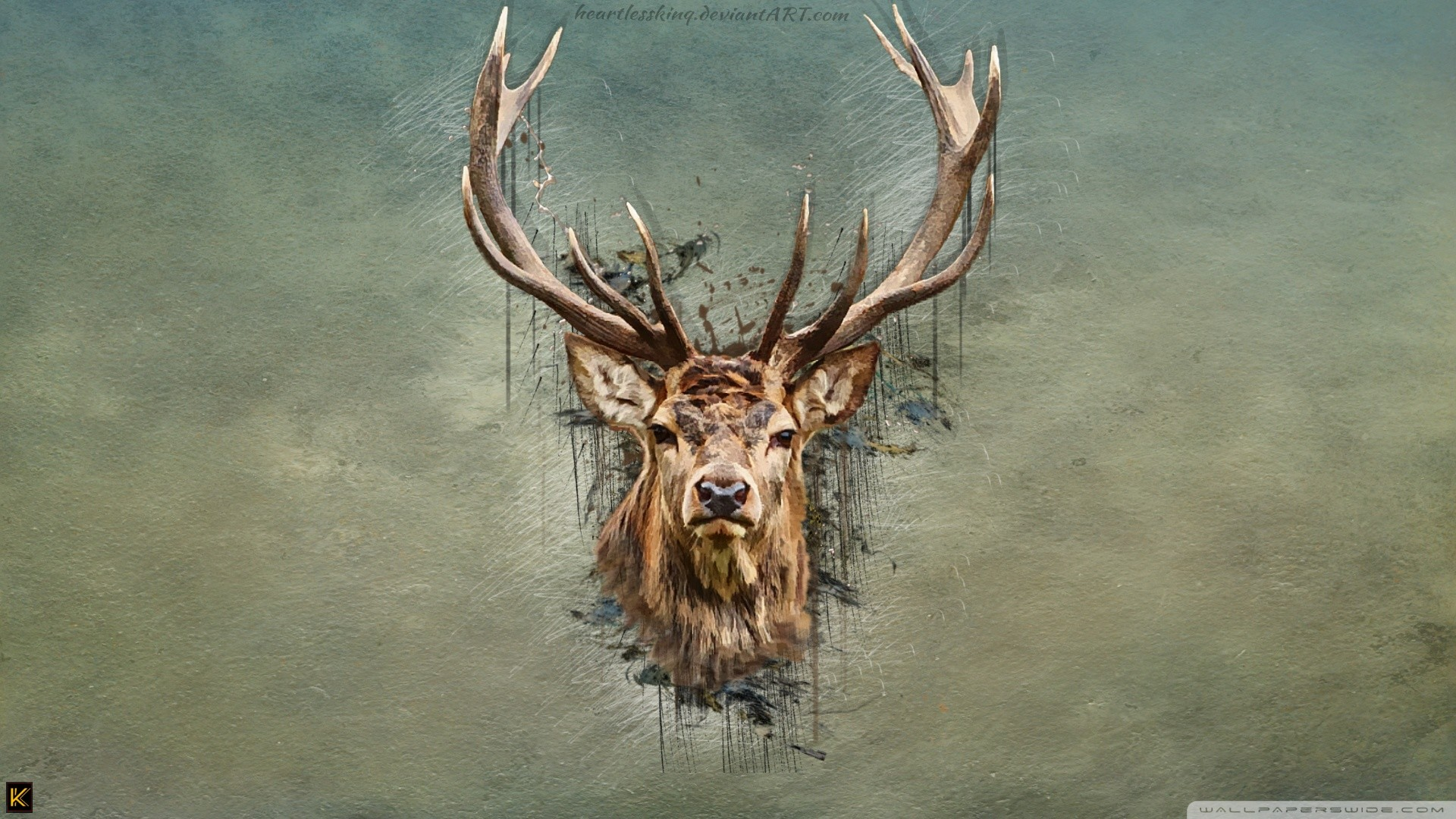Res: 1920x1080, Deer wallpaper Gallery| Beautiful and Interesting  Images,Vectors,Coloring,Cliparts |Free Hd wallpapers