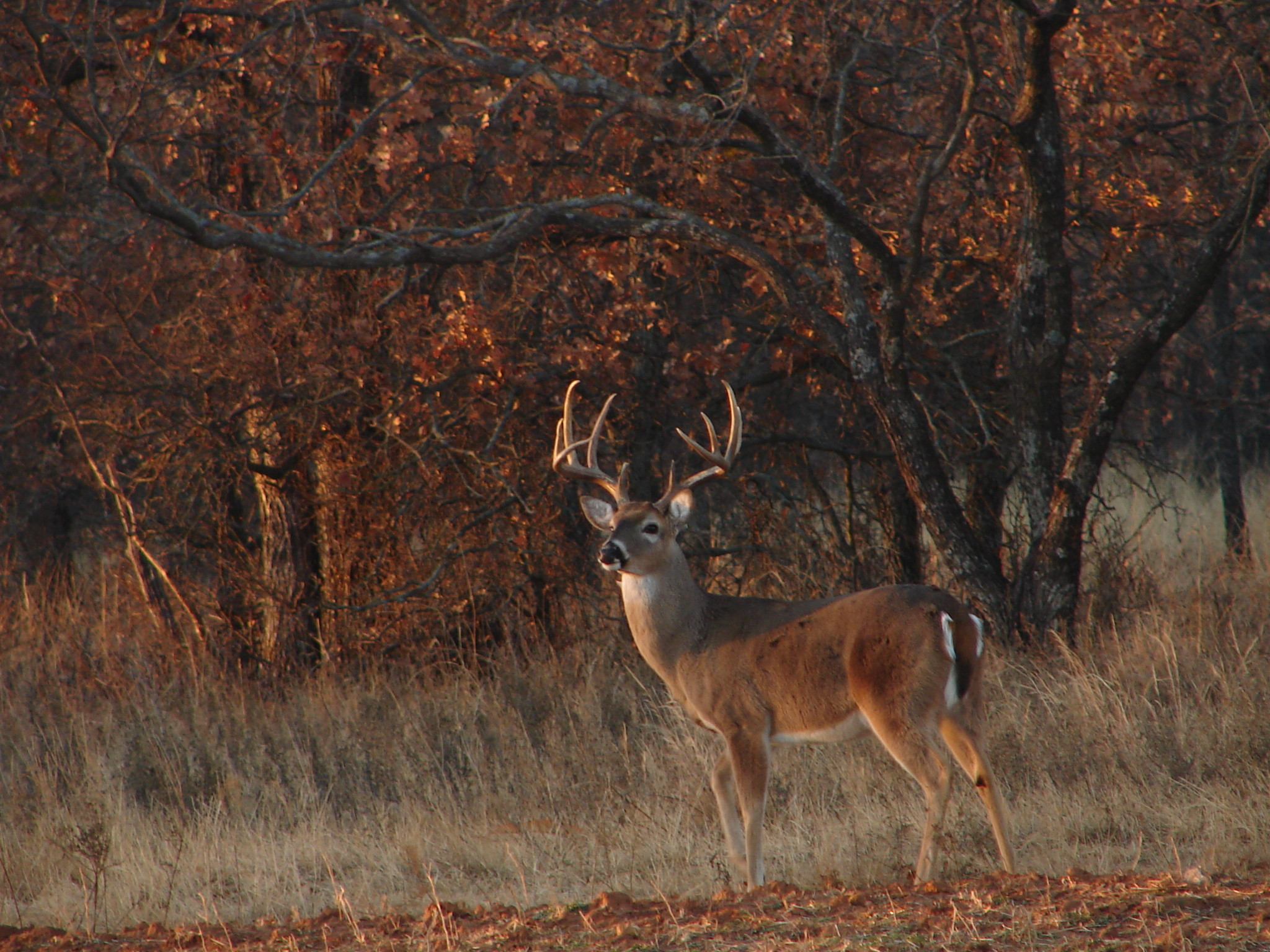Res: 2048x1536, Deer Hunting Forums Thread Cool Pics Age And Desktop Wallpaper