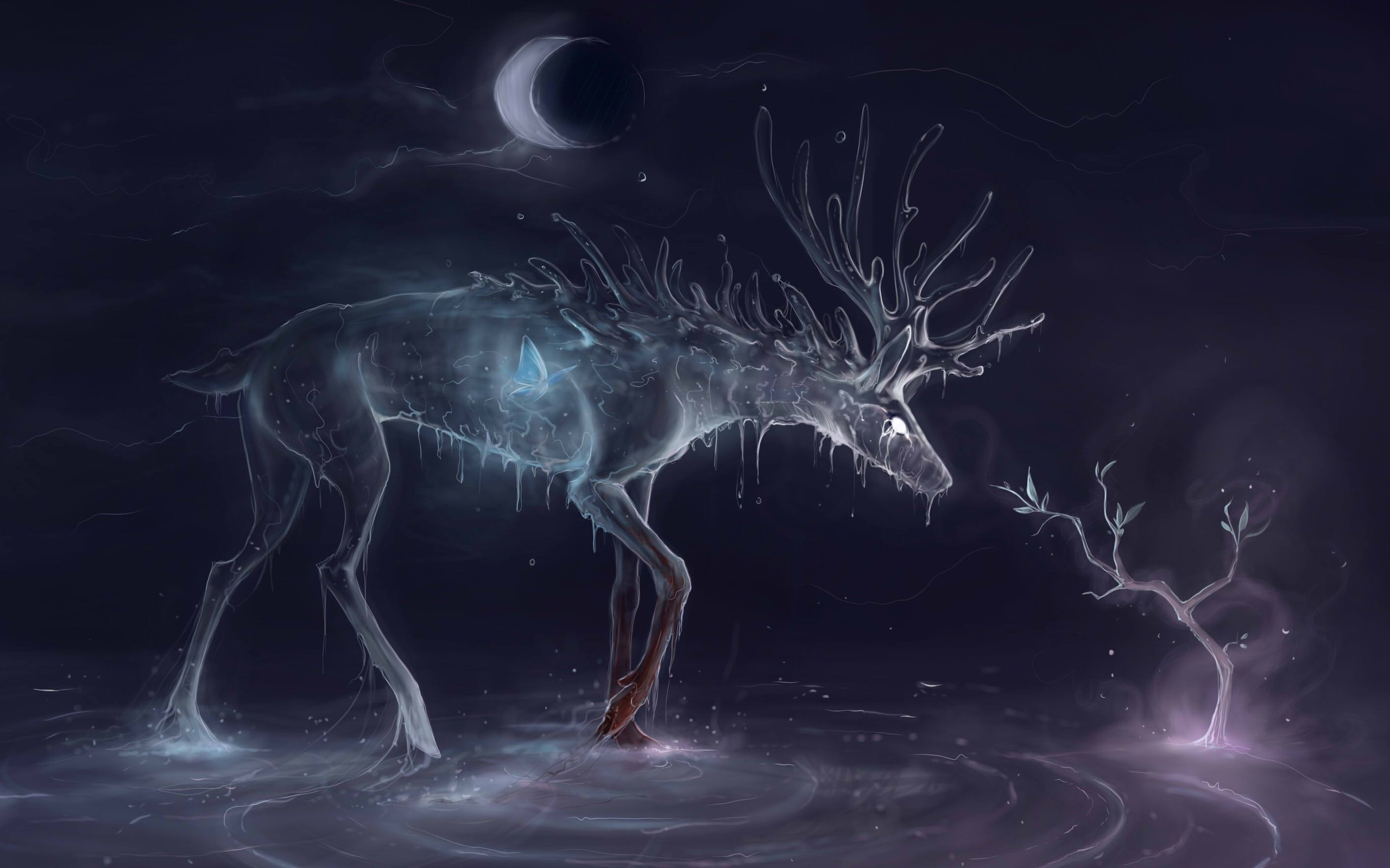 Res: 2560x1600,  Water Deer Wide Wallpapers Hd Hd Desktop Wallpapers Cool  Background Images  Wallpaper HD,