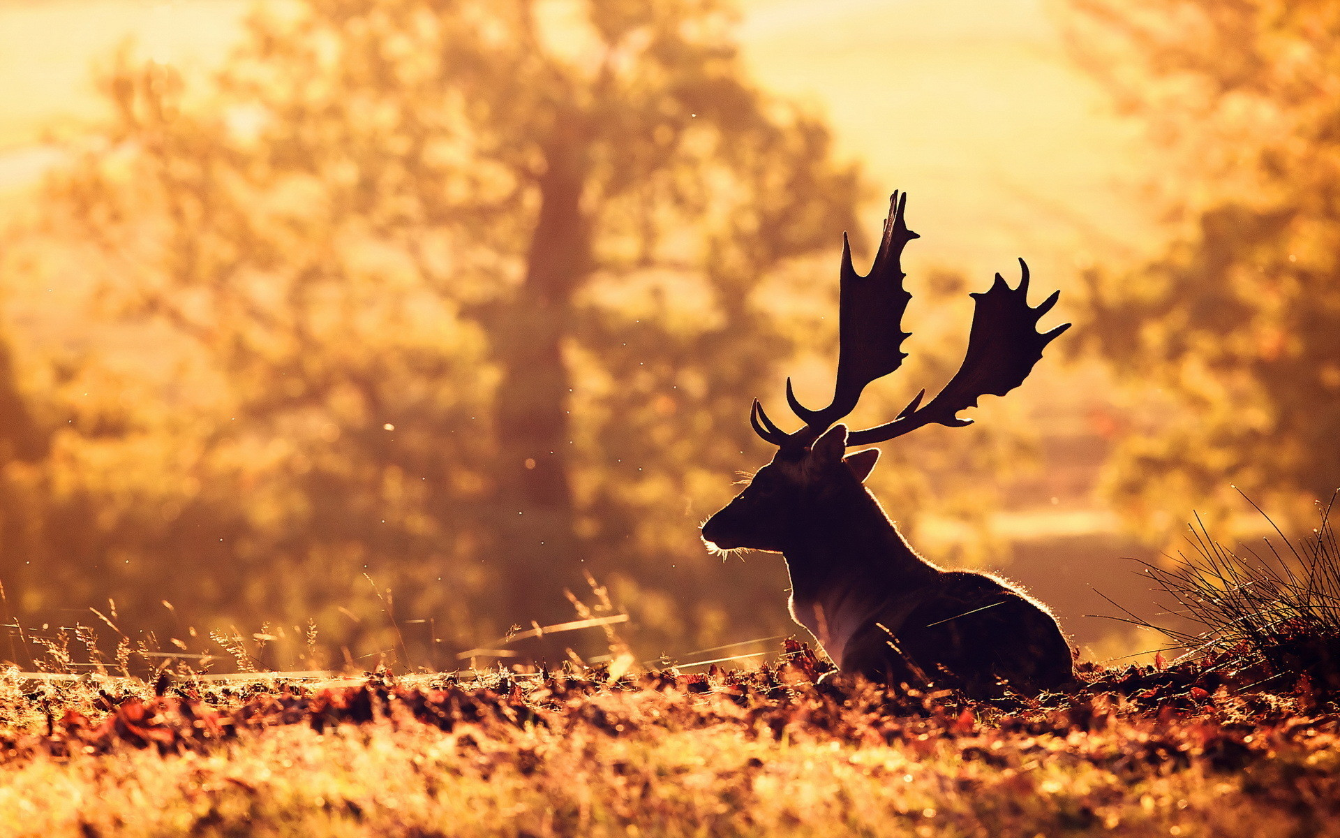 Res: 1920x1200, Deer Wallpaper 16661