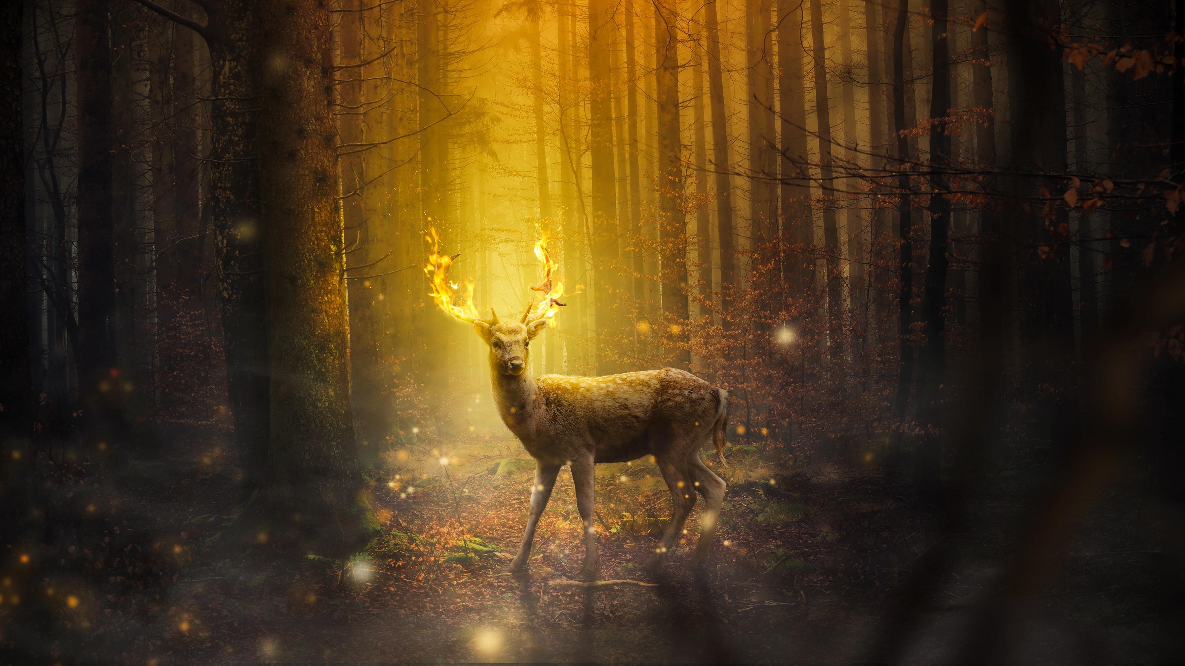 Res: 3840x2160, Deer Fantasy 4K
