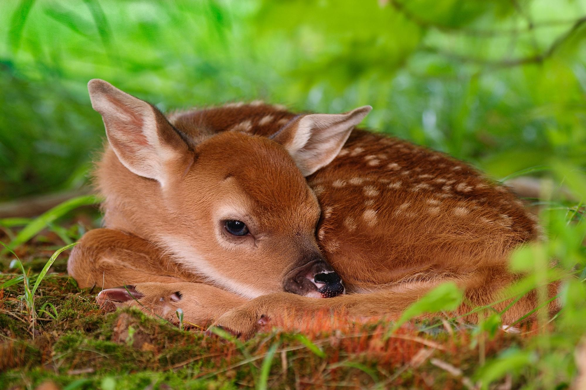 Res: 1999x1333, 1024x640 Letest and best Animals HD Wallpapers Download Animals Desktop .