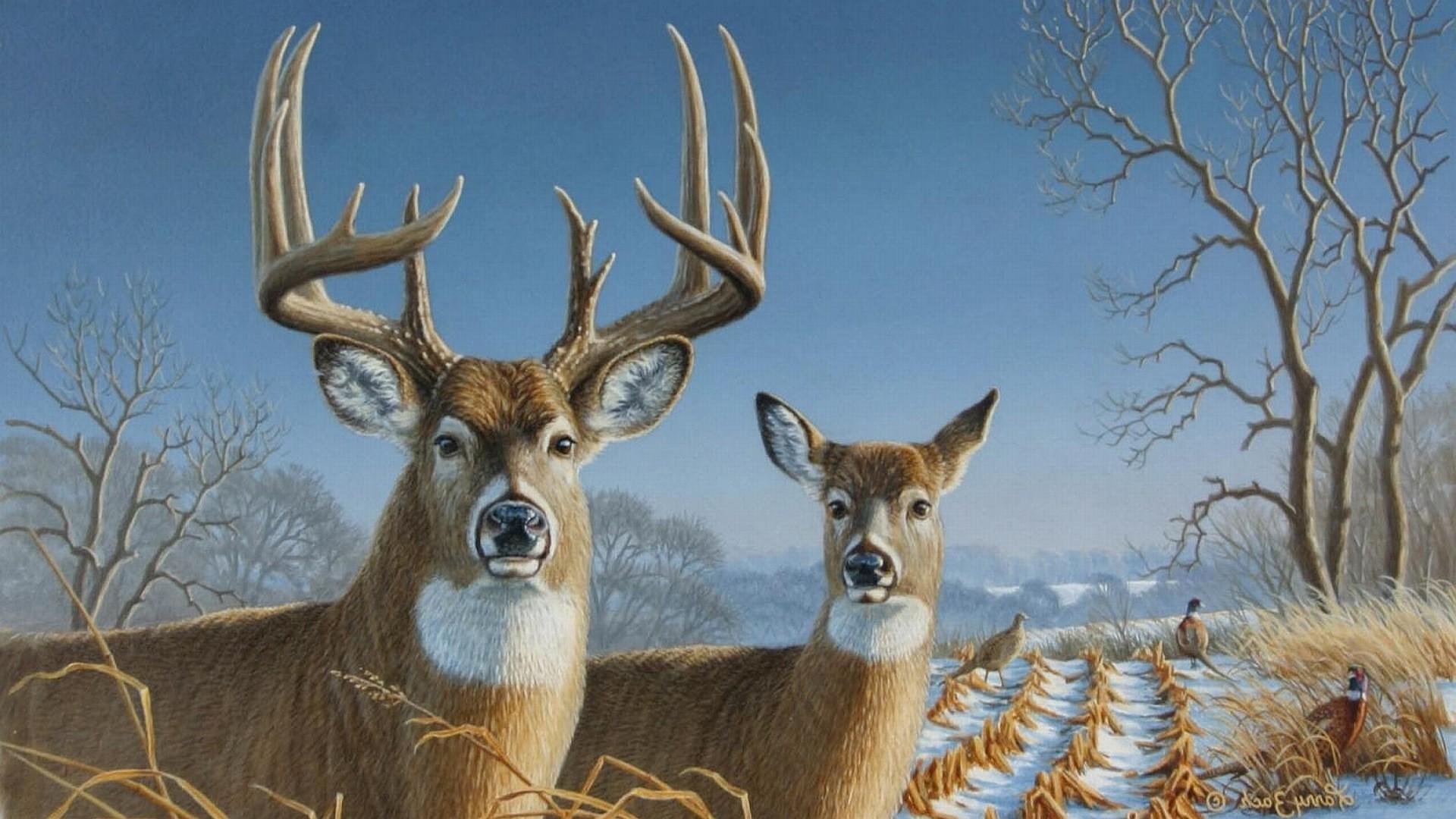 Res: 1920x1080, Deer Wallpaper HD High Resolution