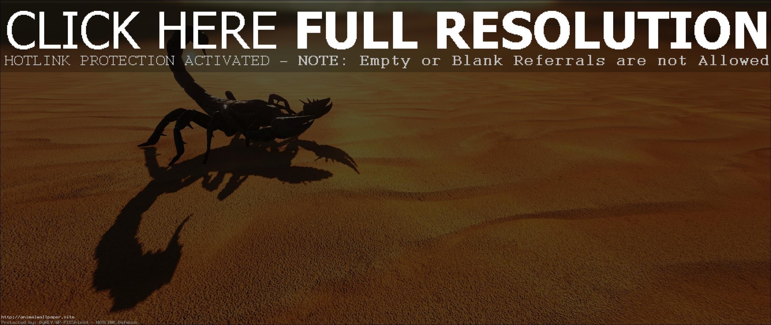 Res: 2560x1080, The Best Desert Scorpion Wallpaper