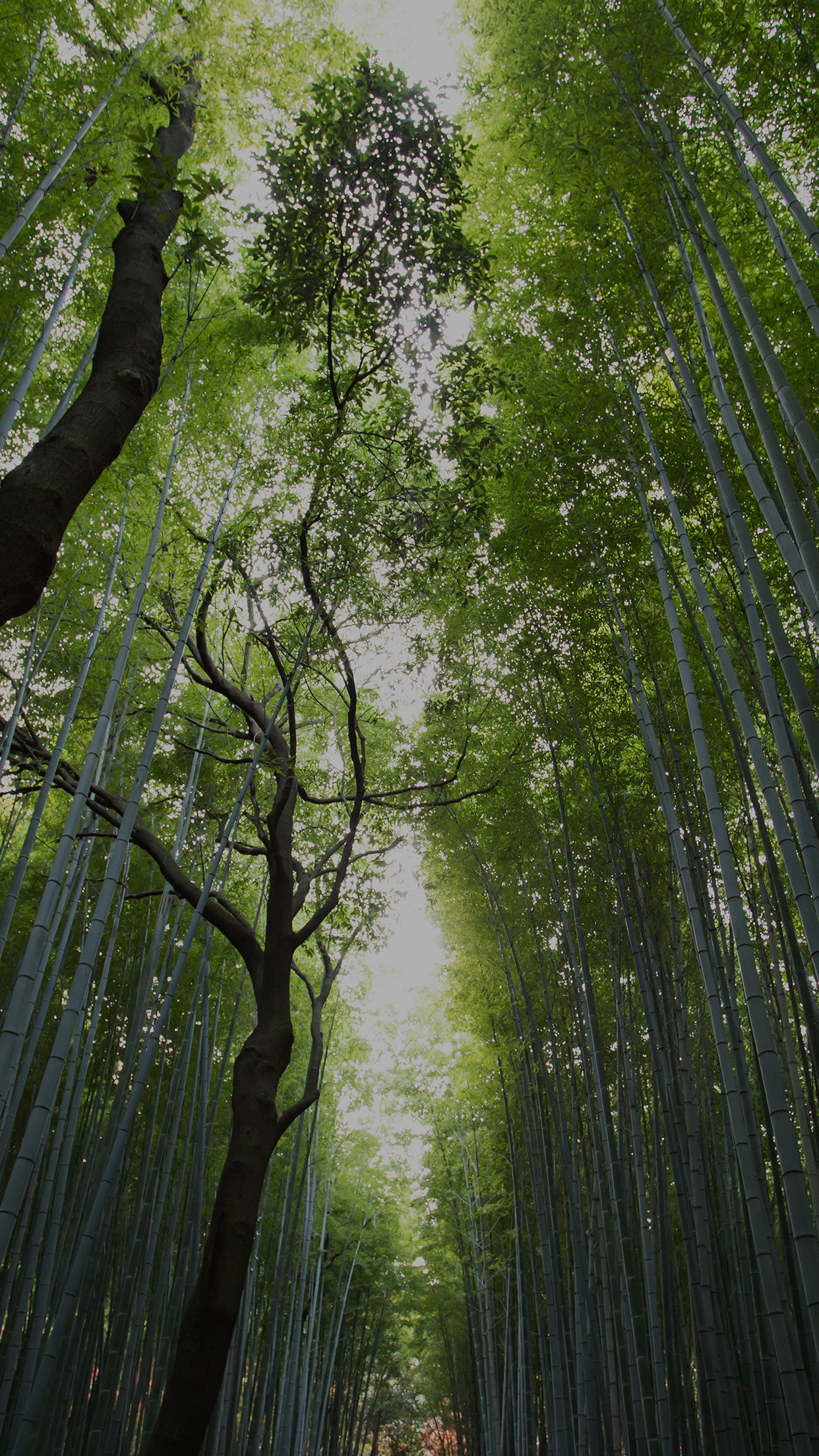 Res: 1242x2208, Nature Wallpaper iPhone 25