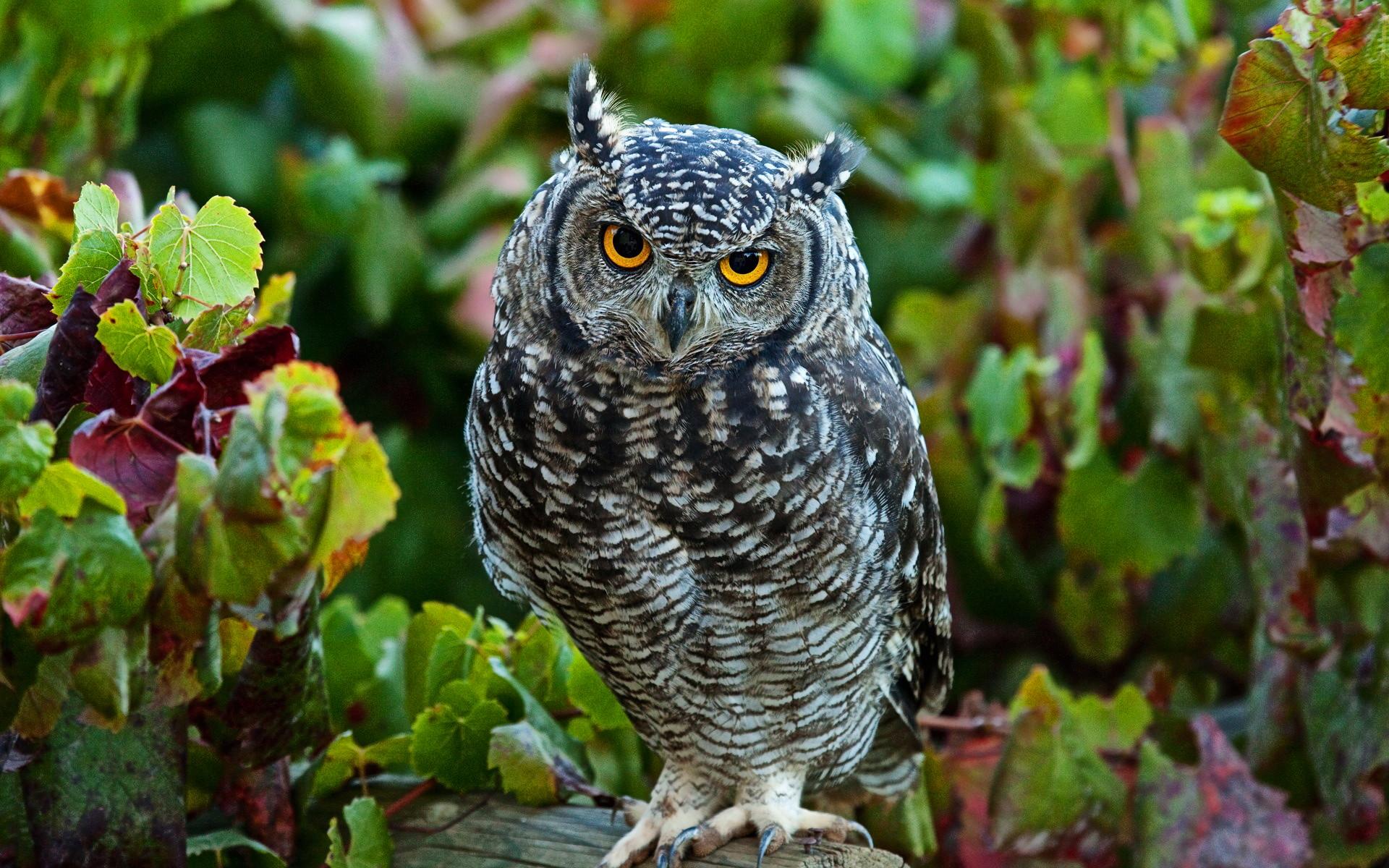 Res: 1920x1200, Cute Owl Wallpaper 15772