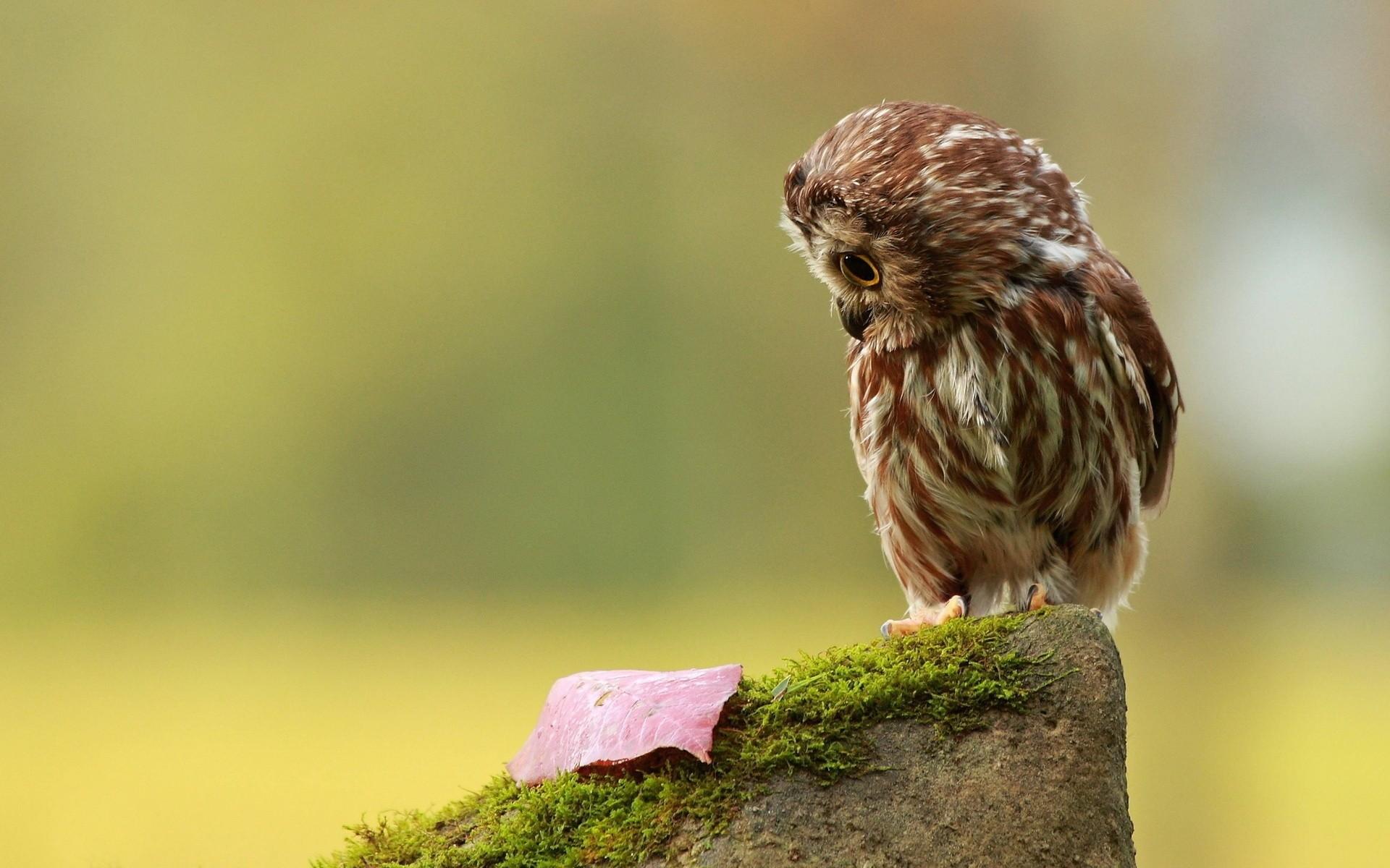 Res: 1920x1200, Cute Owl Wallpaper 15780