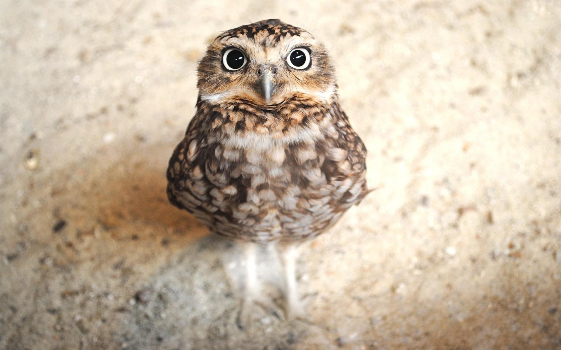 Res: 1920x1200, Cute Owl Wallpaper