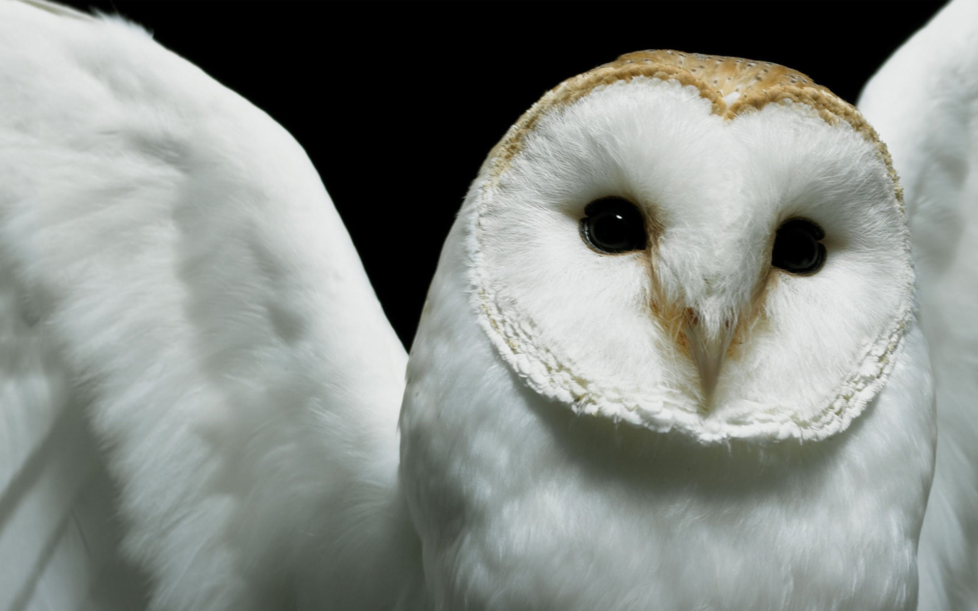 Res: 1920x1200, Cute Owl Background Image