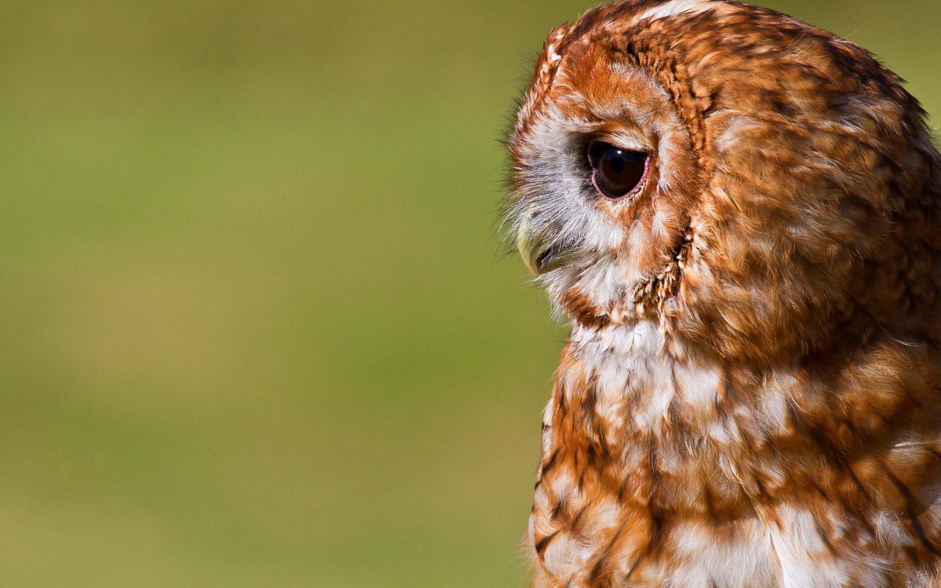 Res: 1920x1200, cute owl backgrounds. Â«Â«