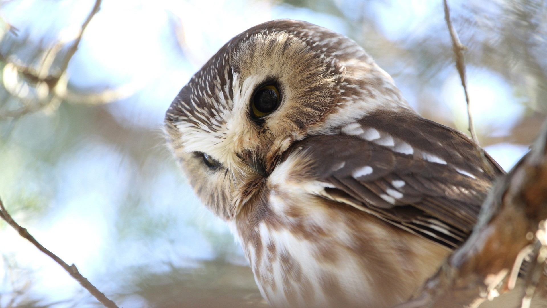Res: 1920x1080, Cute Owl Picture Free Download.