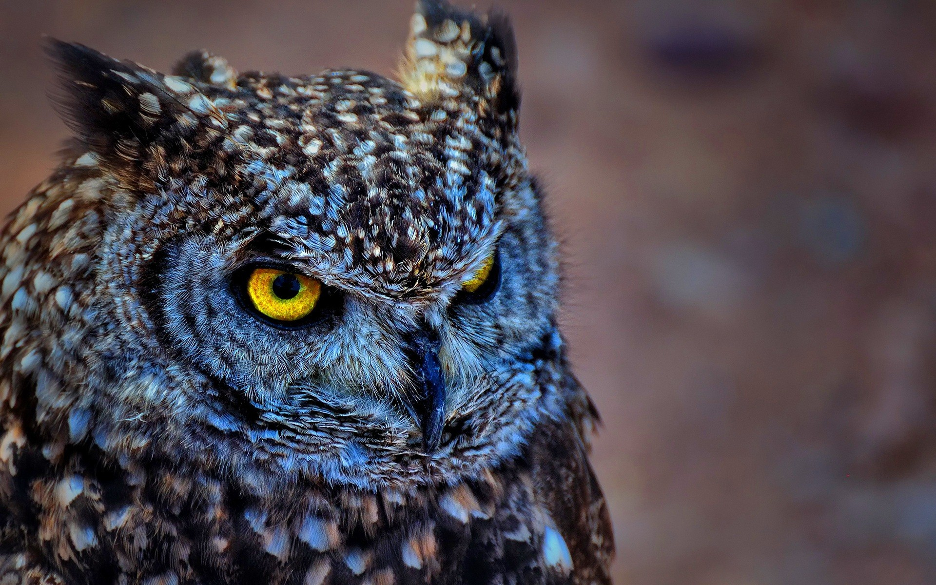 Res: 1920x1200, Wealth Pictures Of Owls To Download 6041