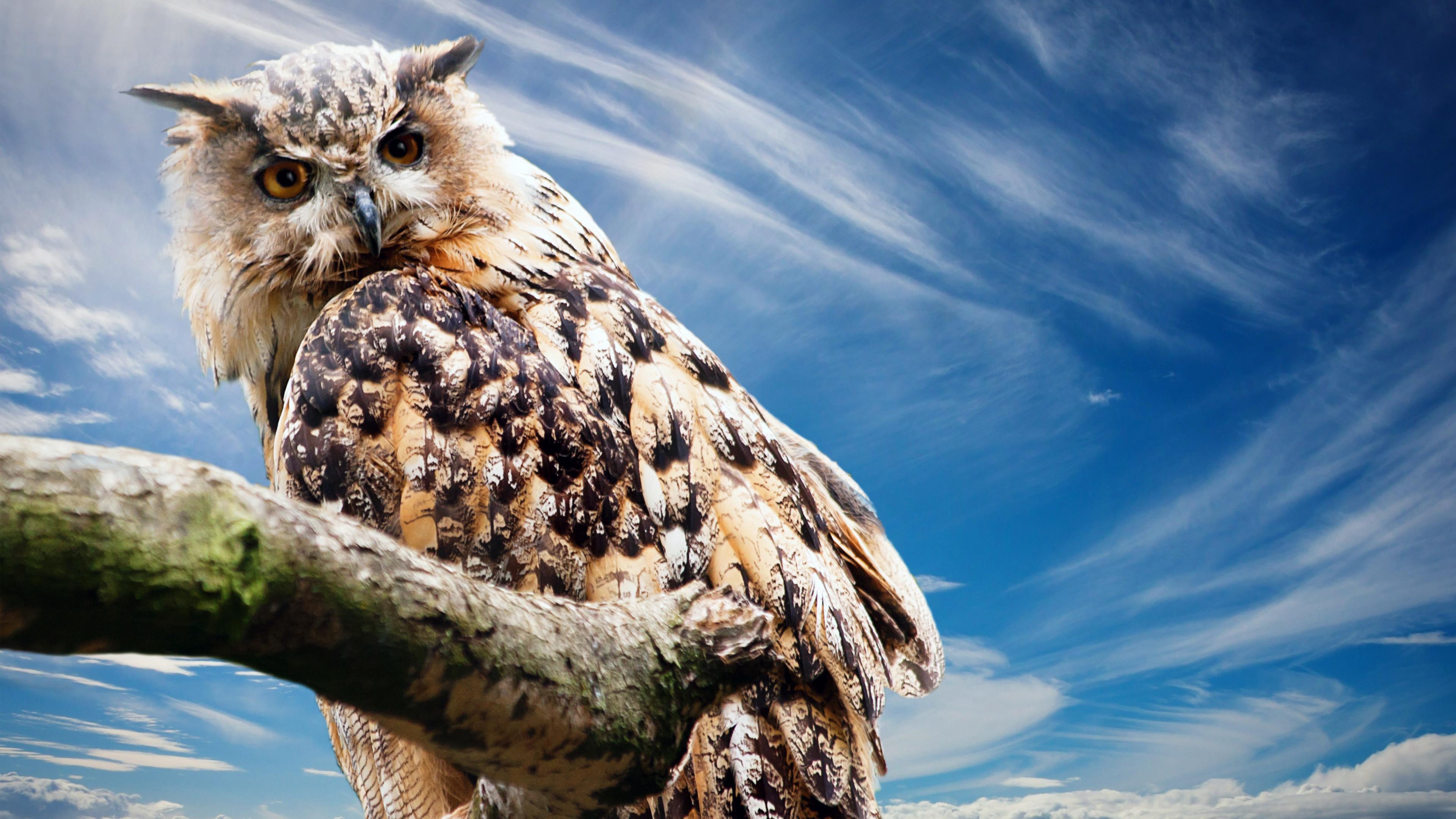 Res: 3840x2160, Owl