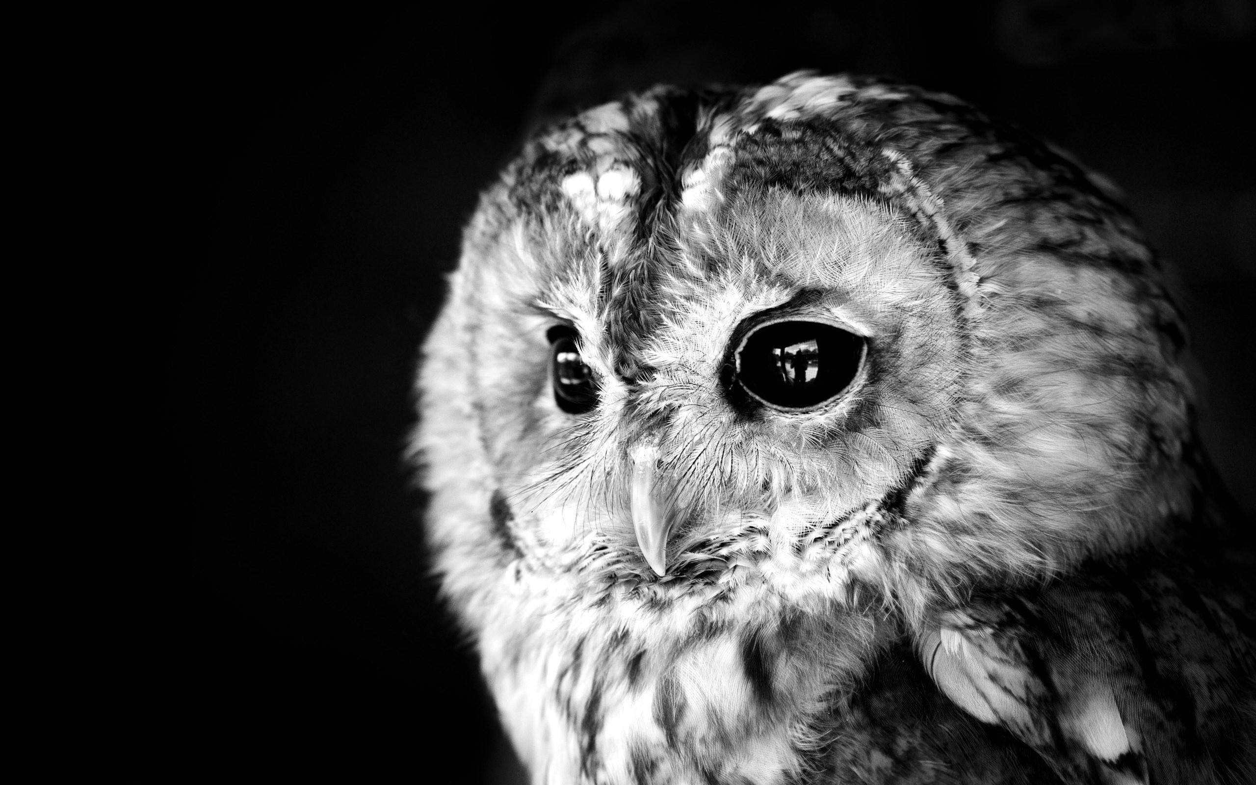 Res: 2560x1600, ... Cute owl HD Wallpaper