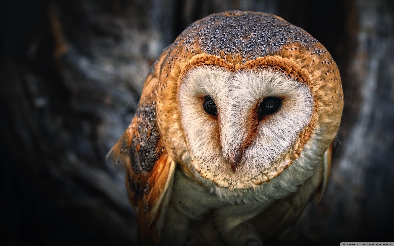 Res: 2880x1800, Cute Owl Wallpaper 64