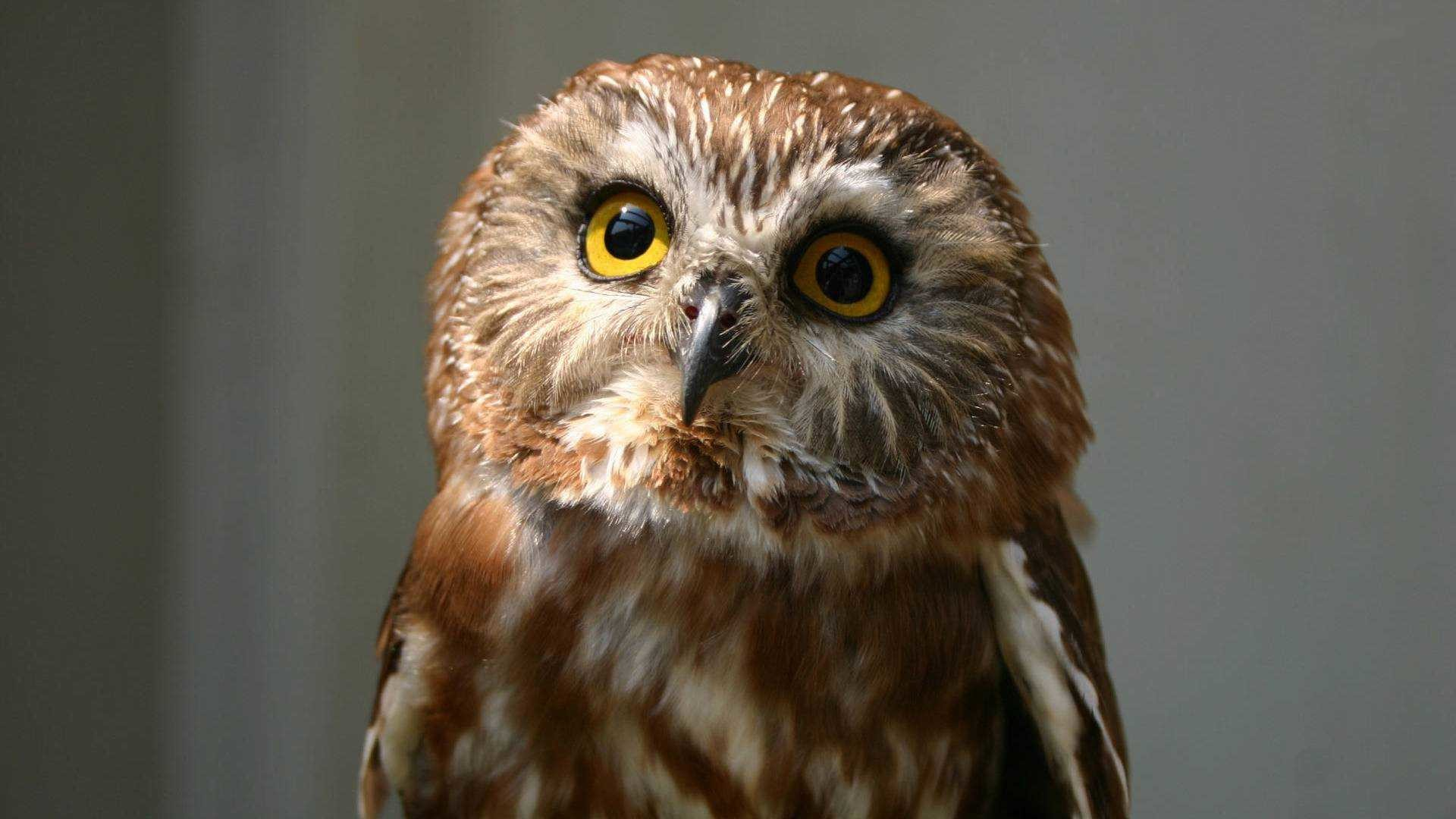 Res: 1920x1080, Wallpaper Of Cute Owl Hd Pictures Full Pics Desktop Images