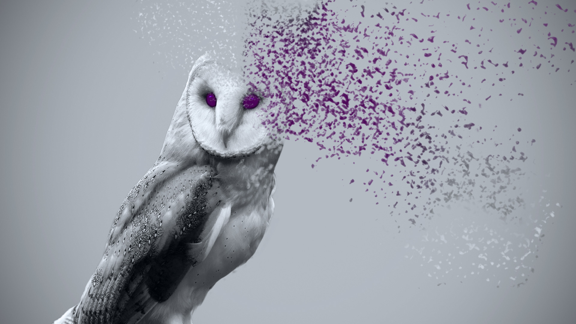 Res: 1920x1080, Page a HD Wallpaper Image Background, Design Photos wallkies Cute owl  wallpaper Pinteres